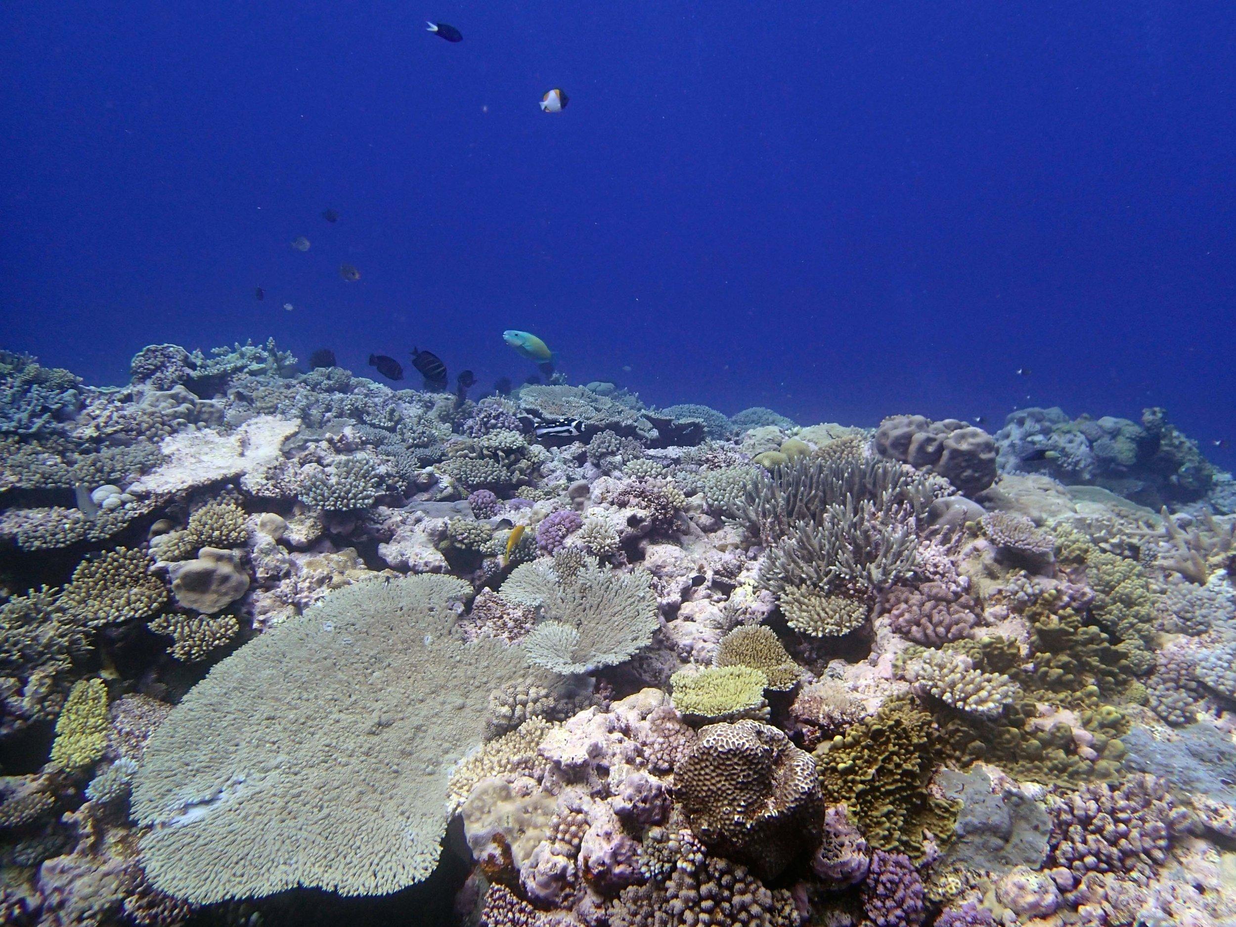 NCPO72 Portail Atoll.jpg