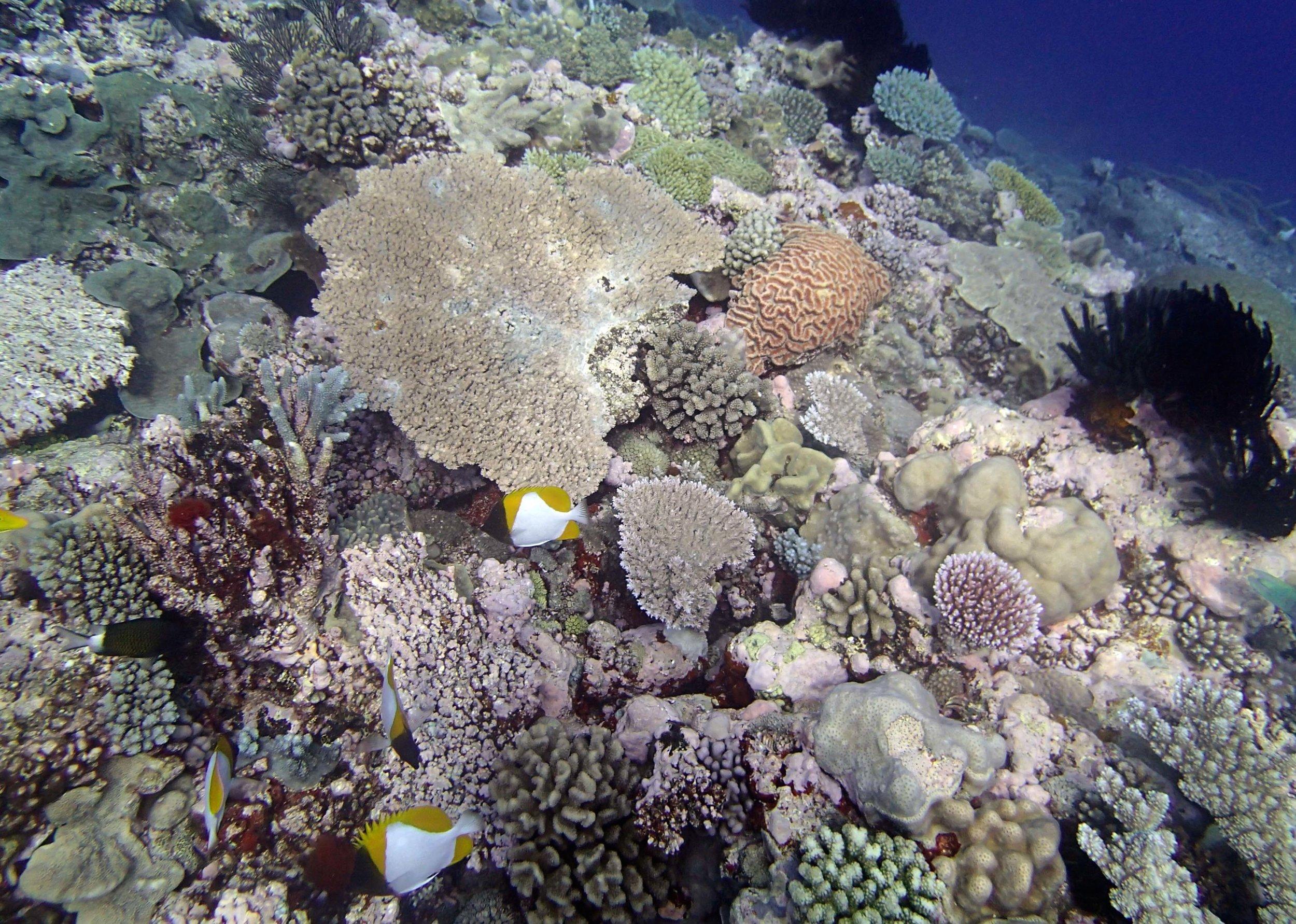 lots of coral.jpg