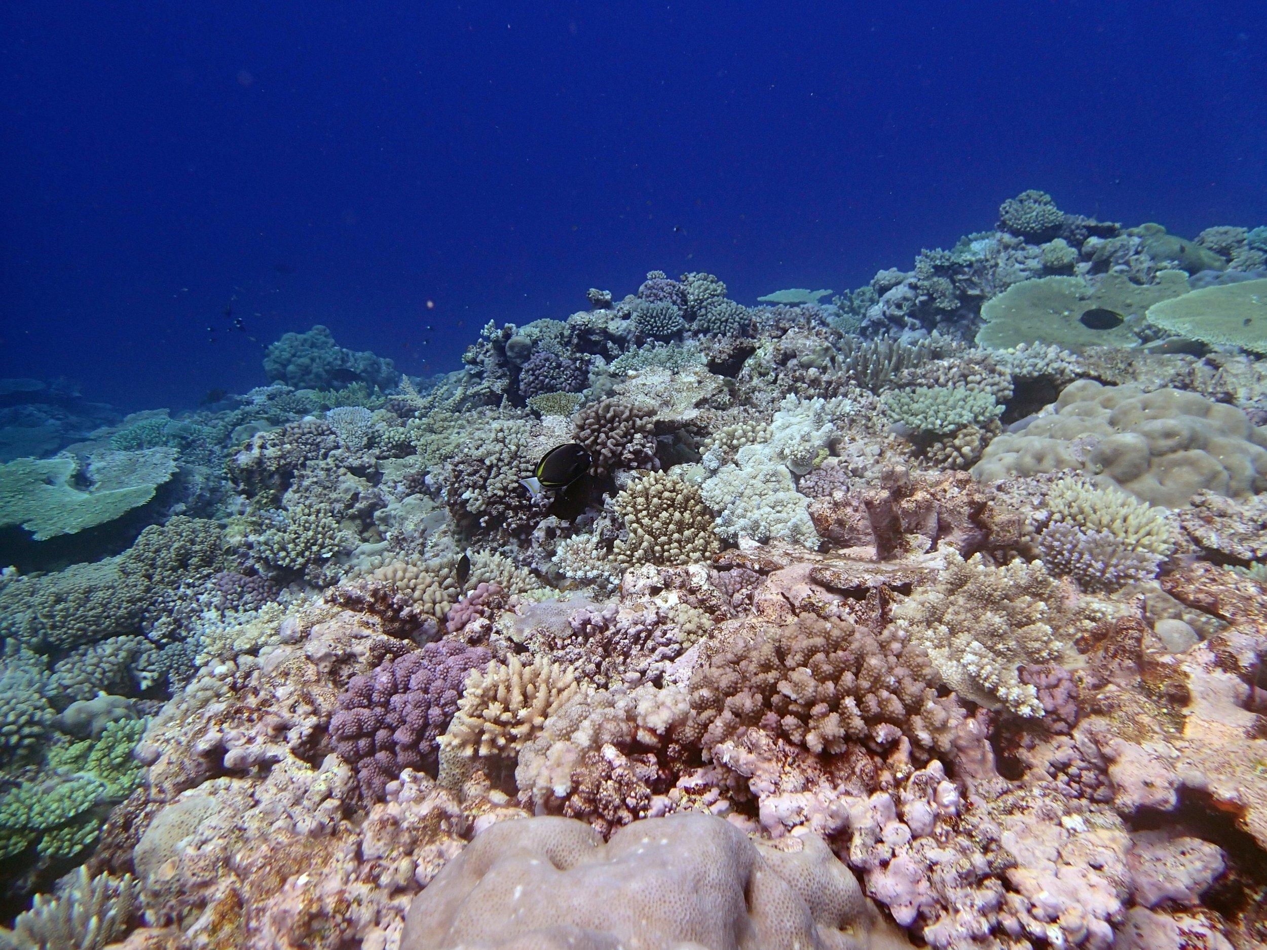 great shallows shot.jpg