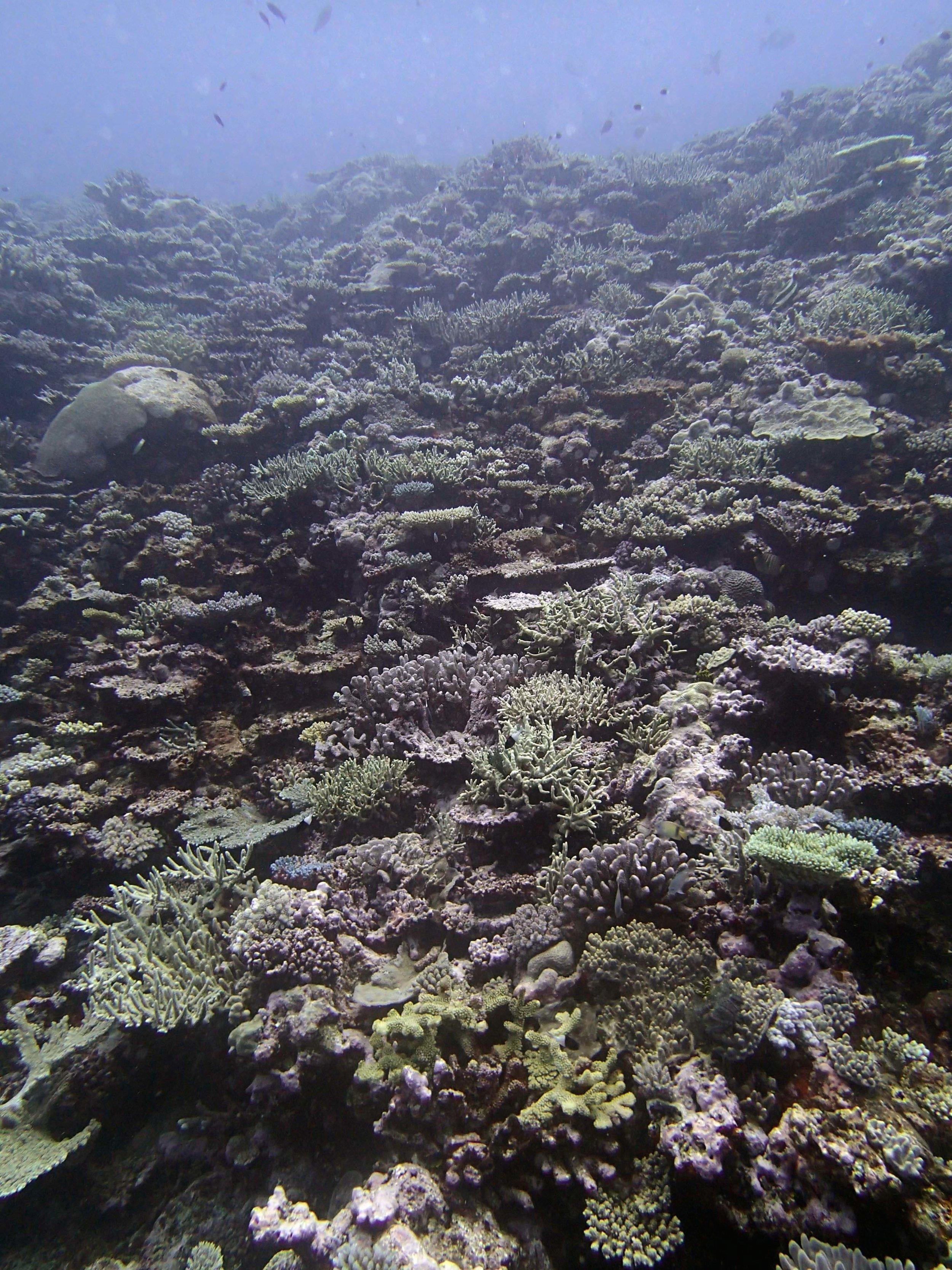 coral amphitheatre.jpg