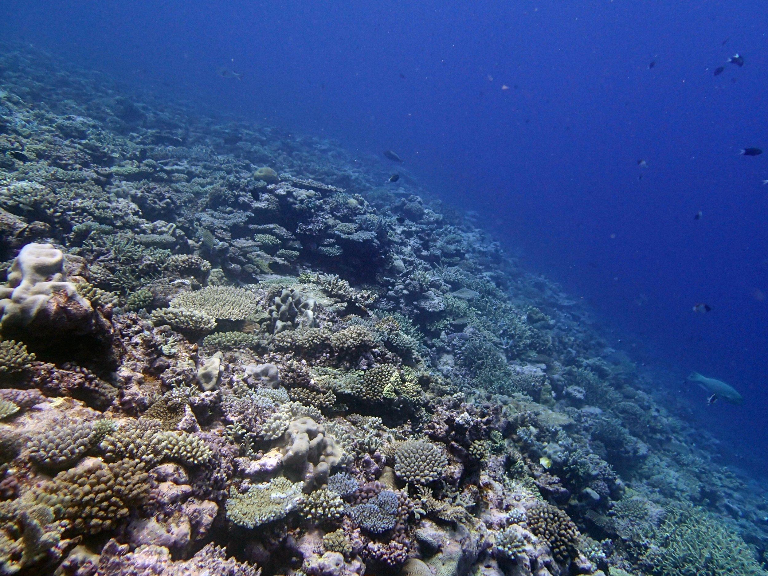 best shot of dive?.jpg