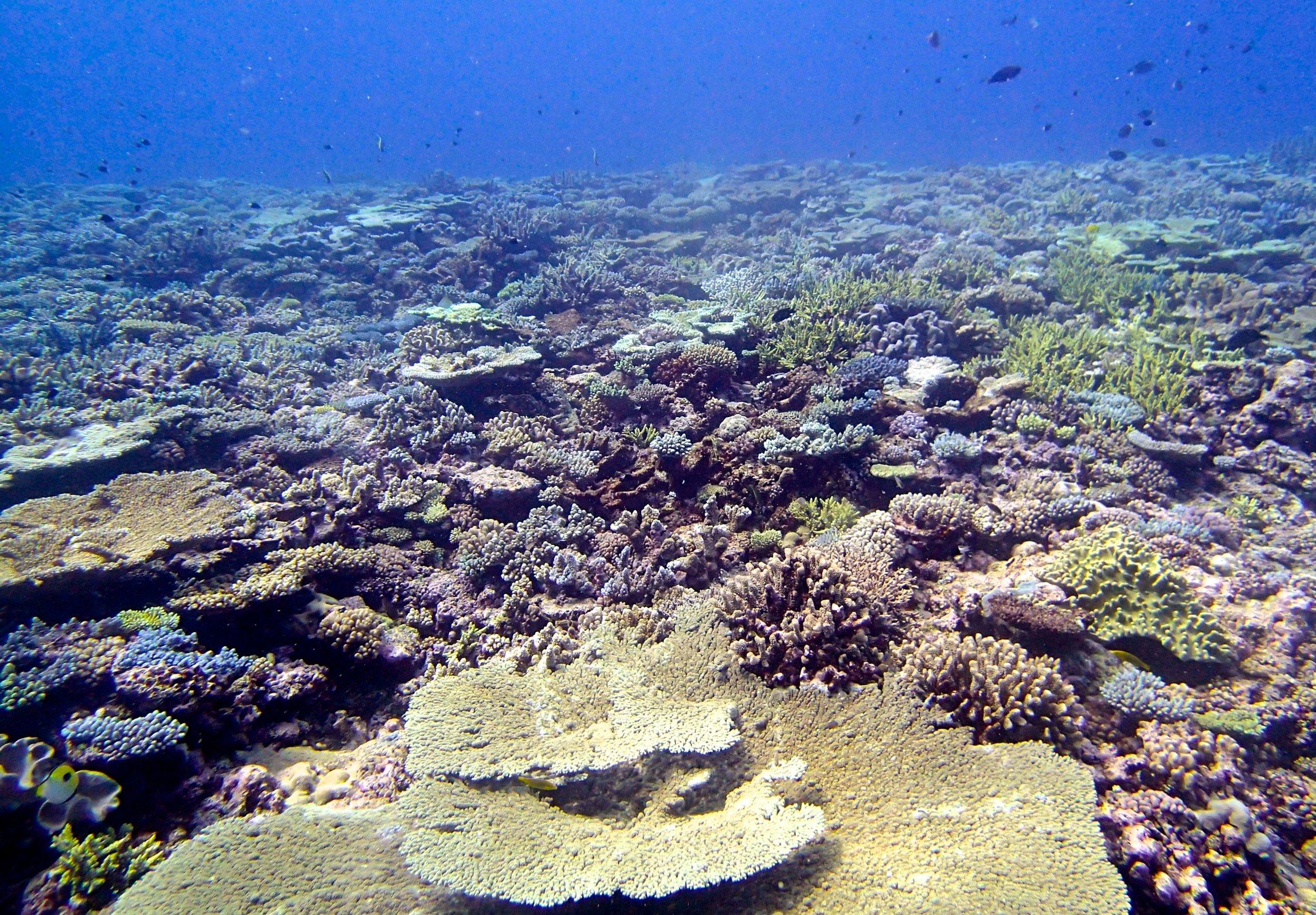 super colorful reef (1).jpg