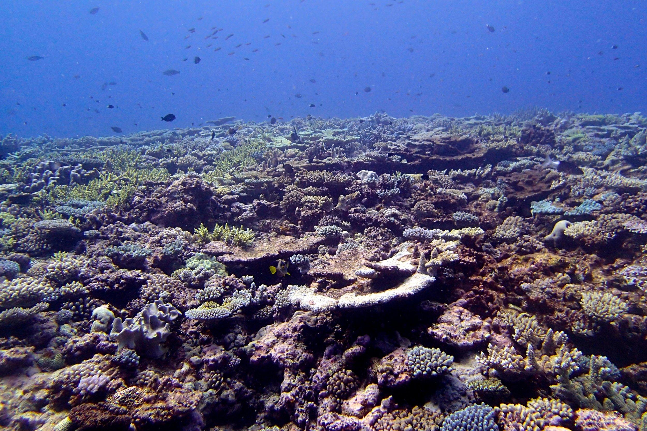 NCPE75 Pelotas Atoll (1).jpg