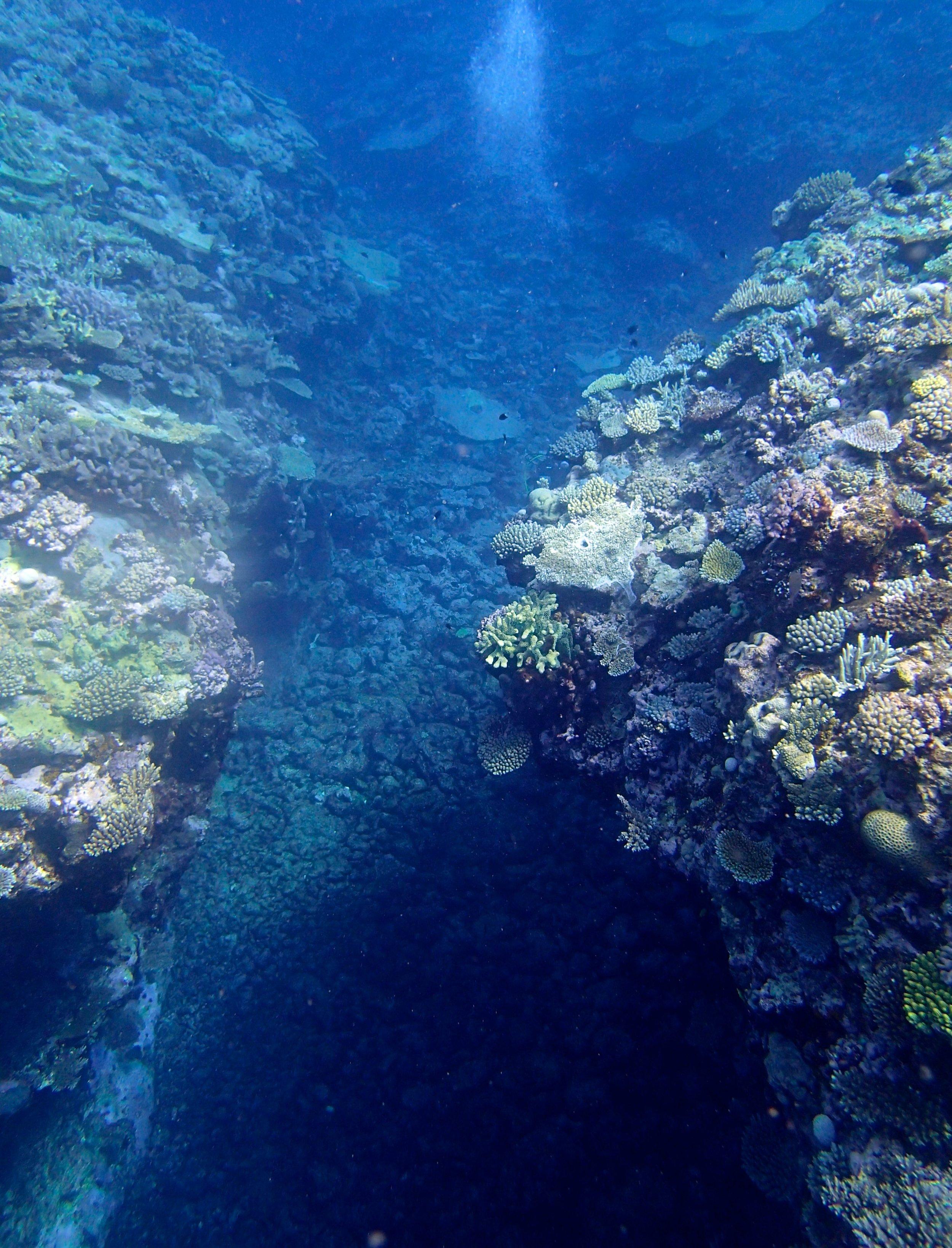 reef crevasse (1).jpg