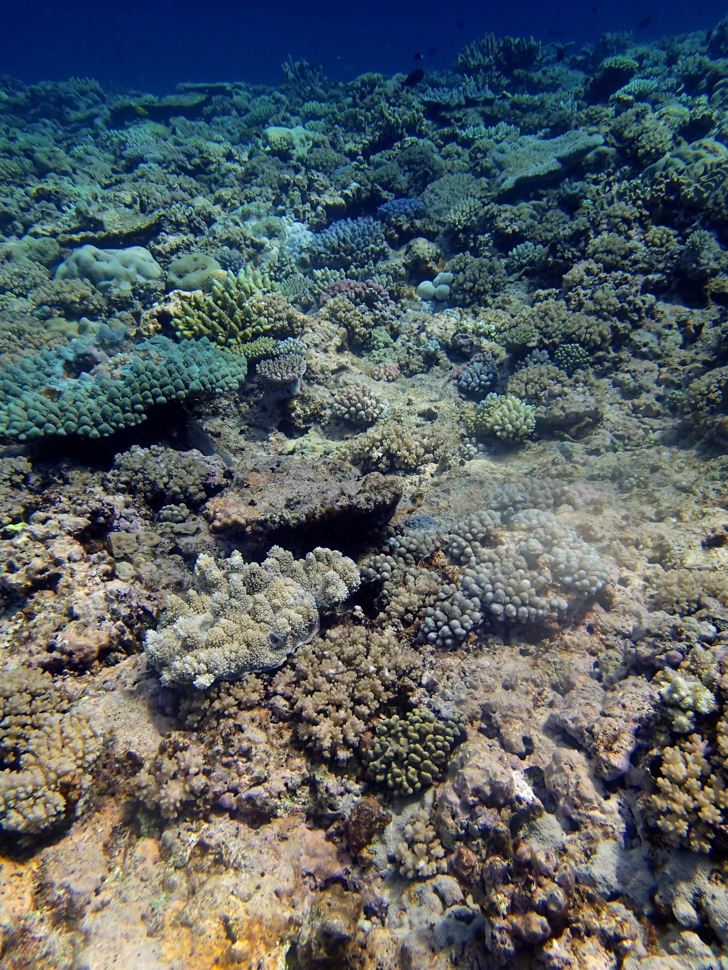 Pelotas Atoll (3).jpg