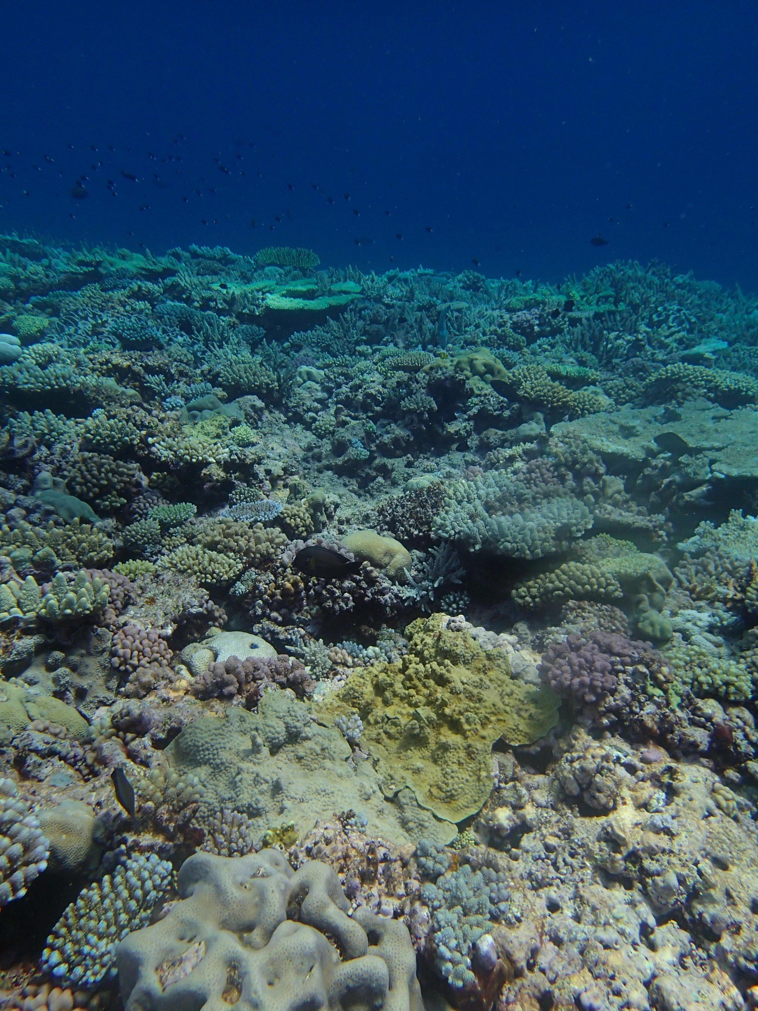 beautiful reef (1).jpg