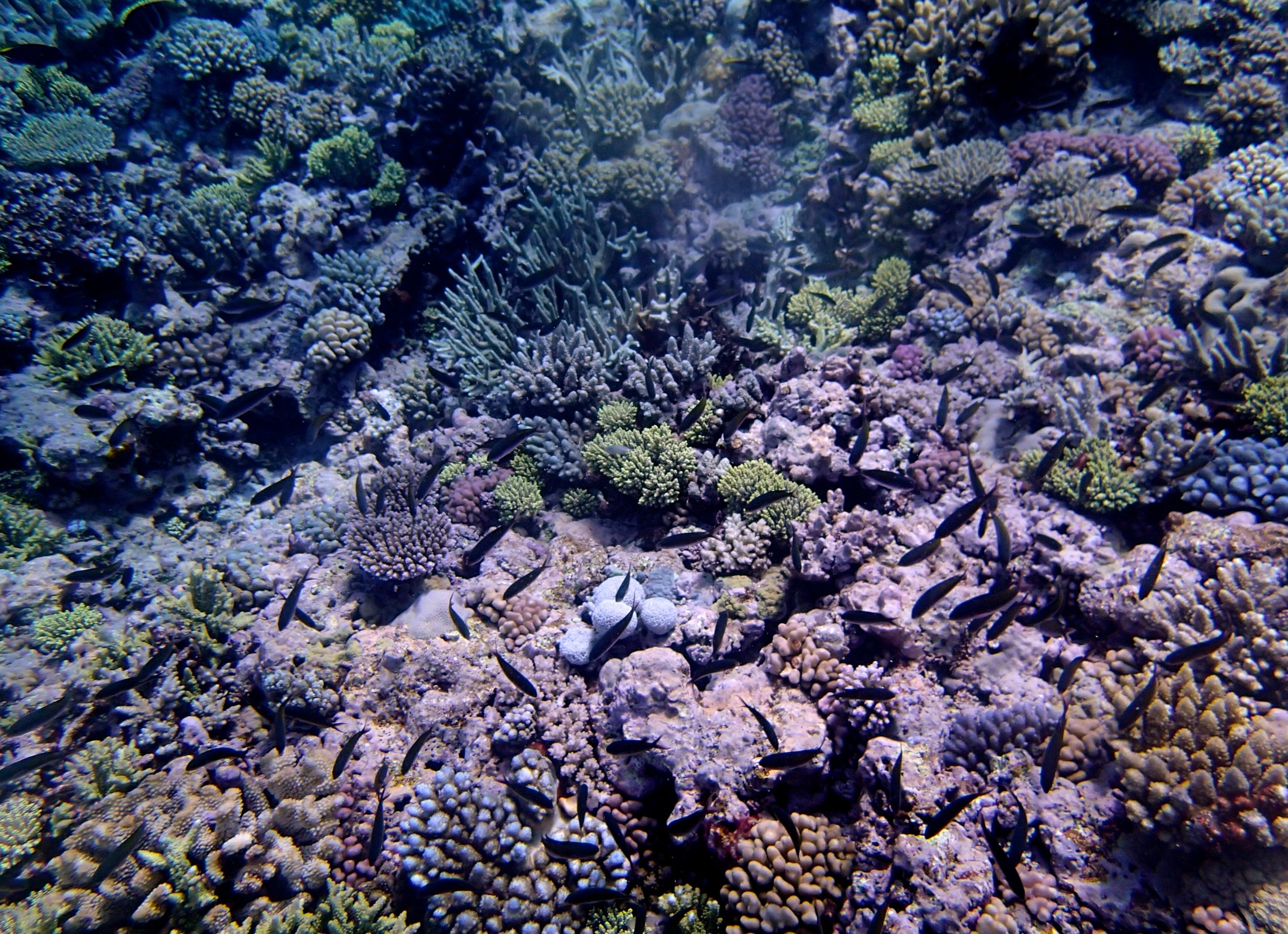 fish covered reef (1).jpg