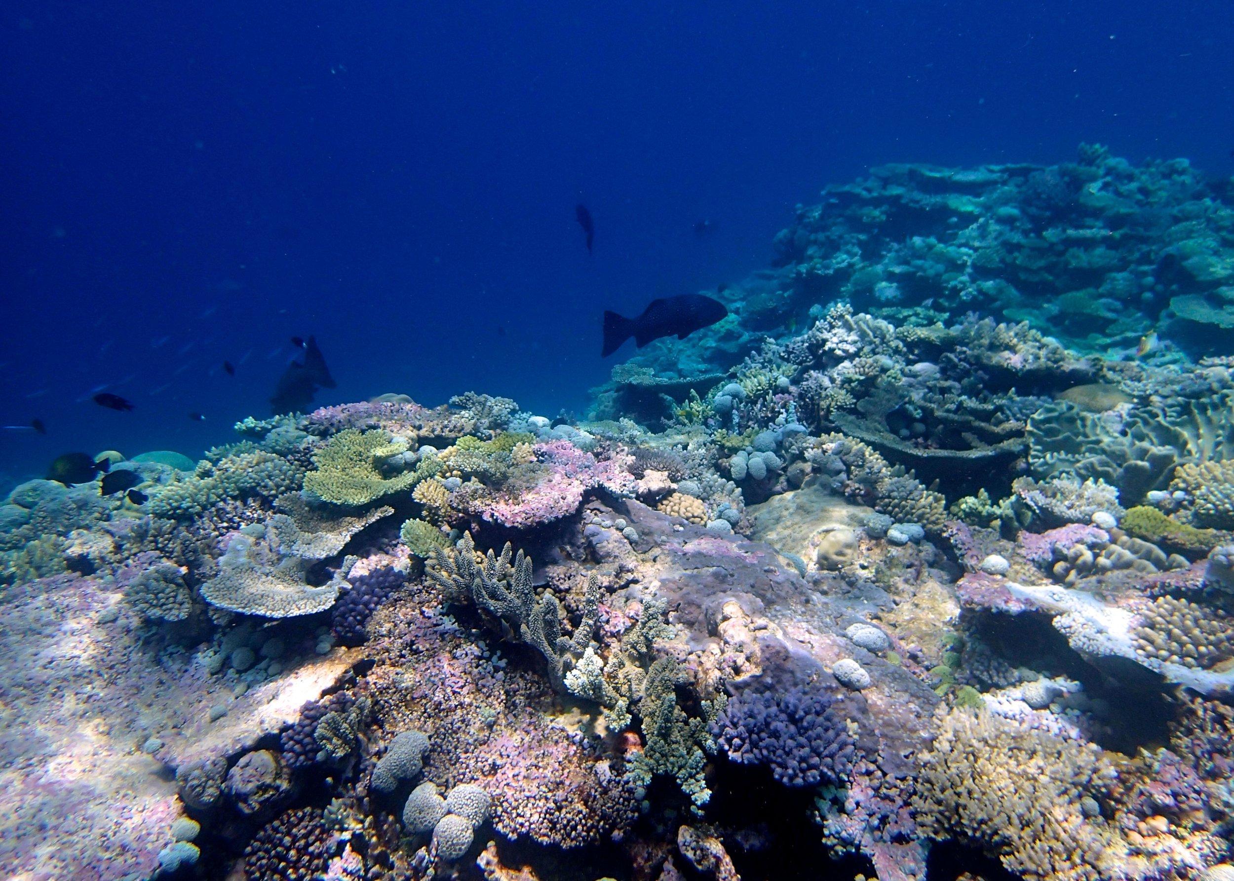 beautiful shallows of Pelotas Atoll.jpg
