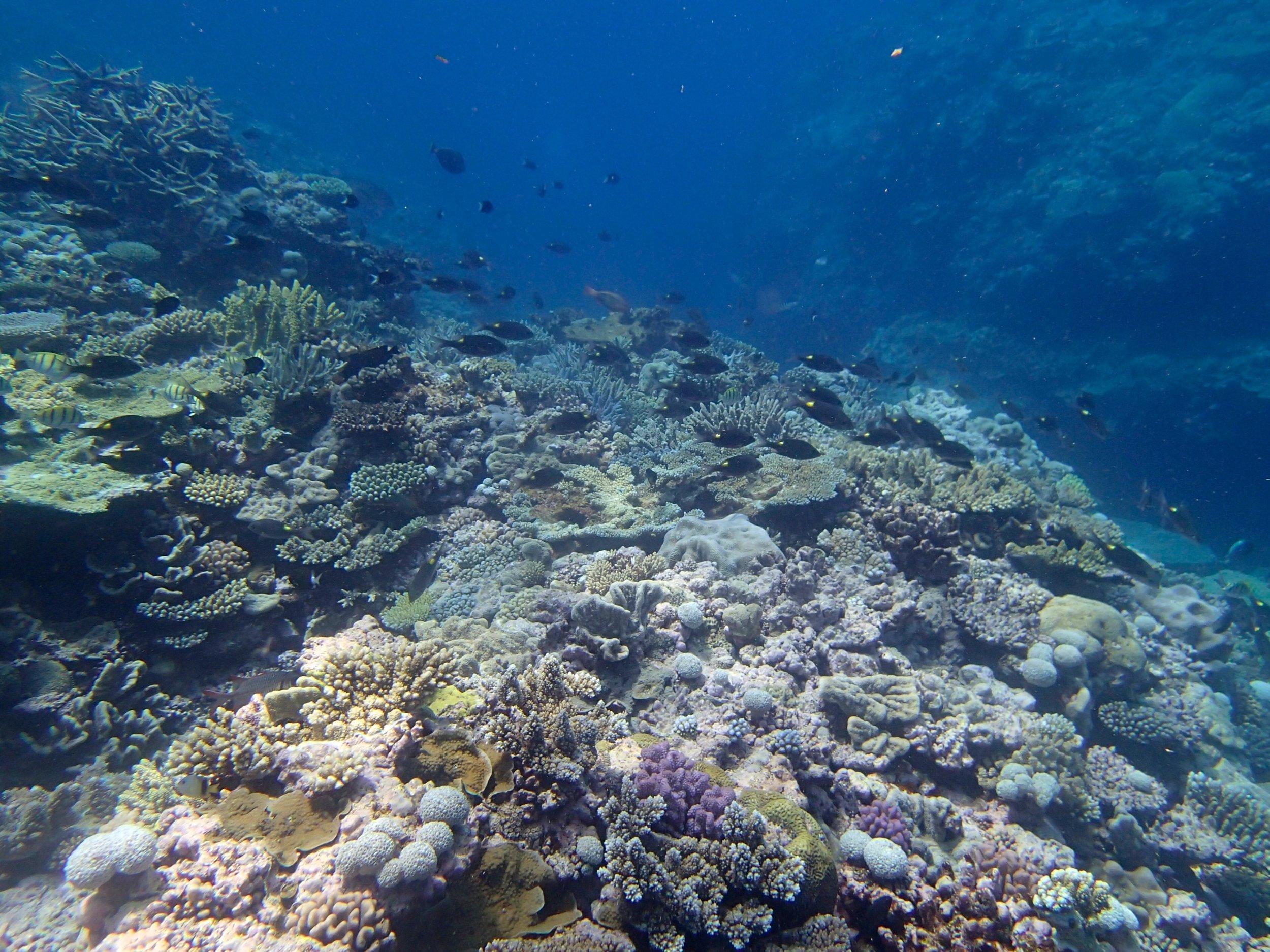 Pelotas Atoll, New Caledonia.jpg