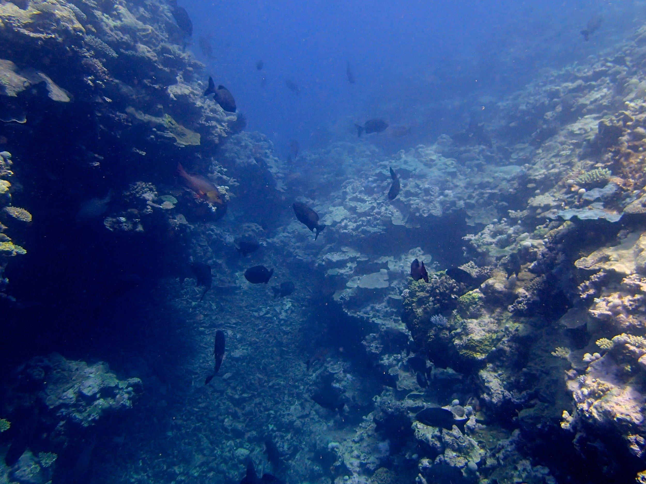 fish tunnel.jpg