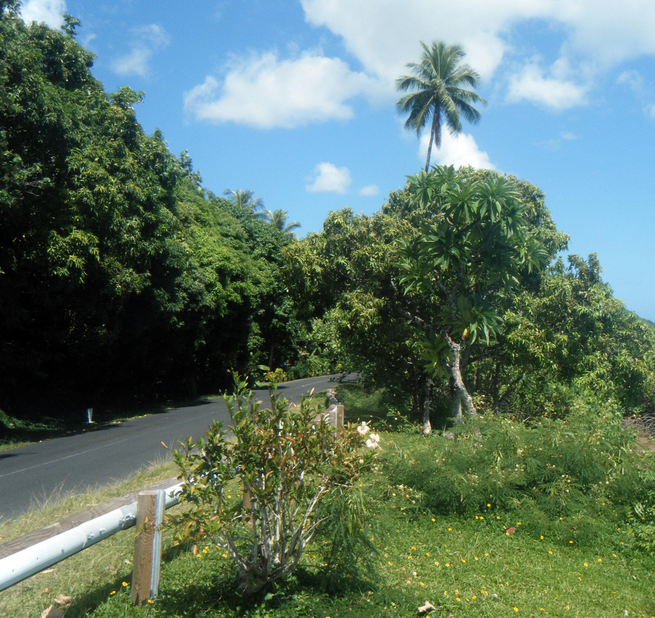 Moorea highway.jpg
