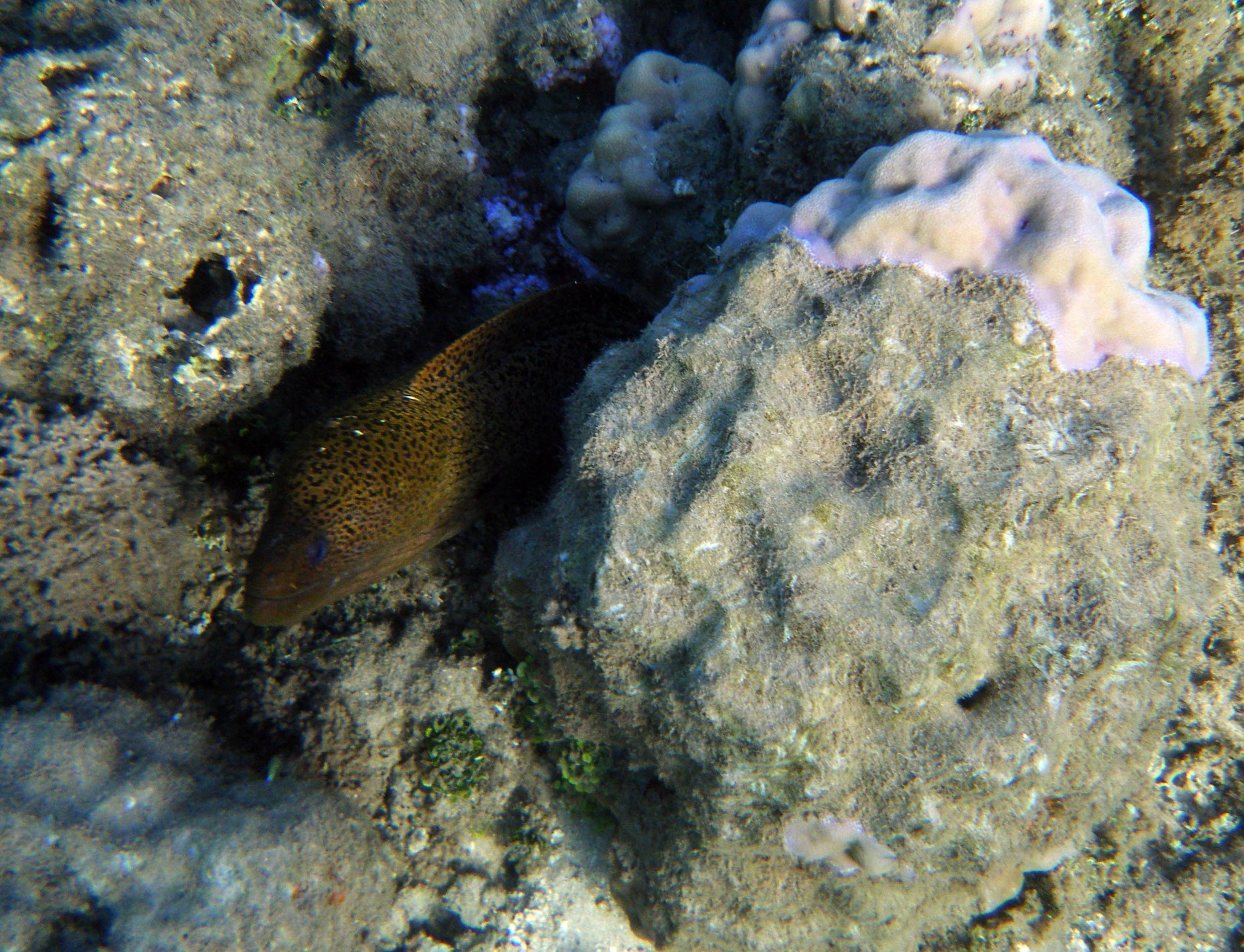 curious eel.jpg