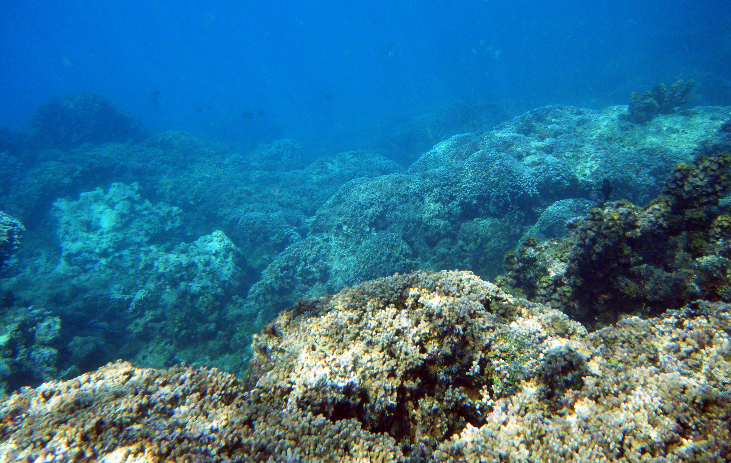 fringing reef 1.jpg