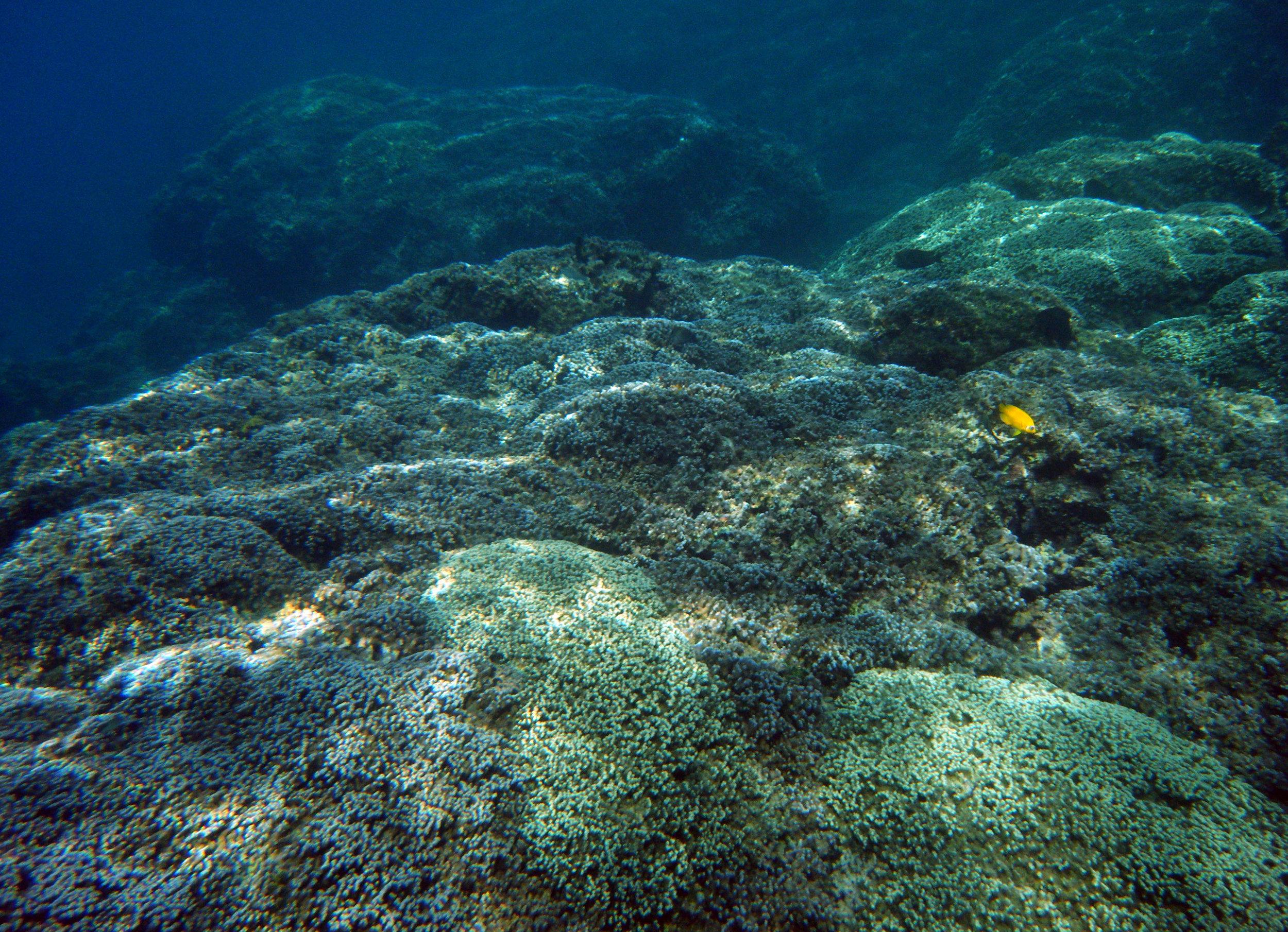 fringing reef.jpg