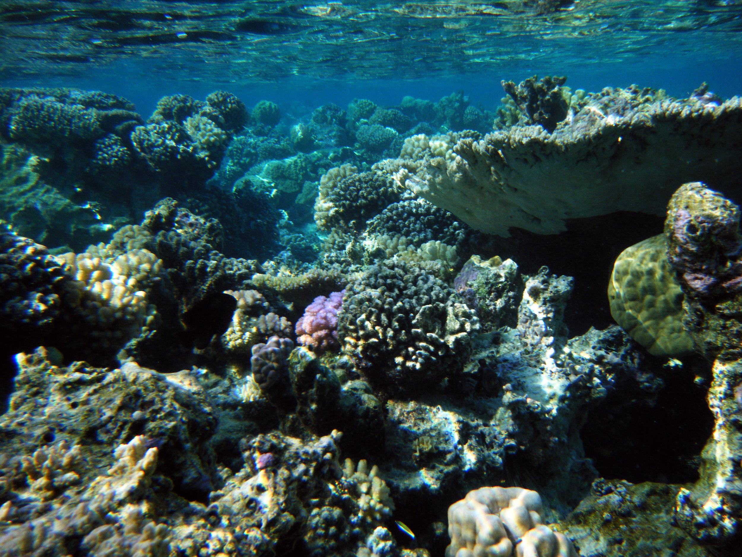amazing underwater beauty.jpg