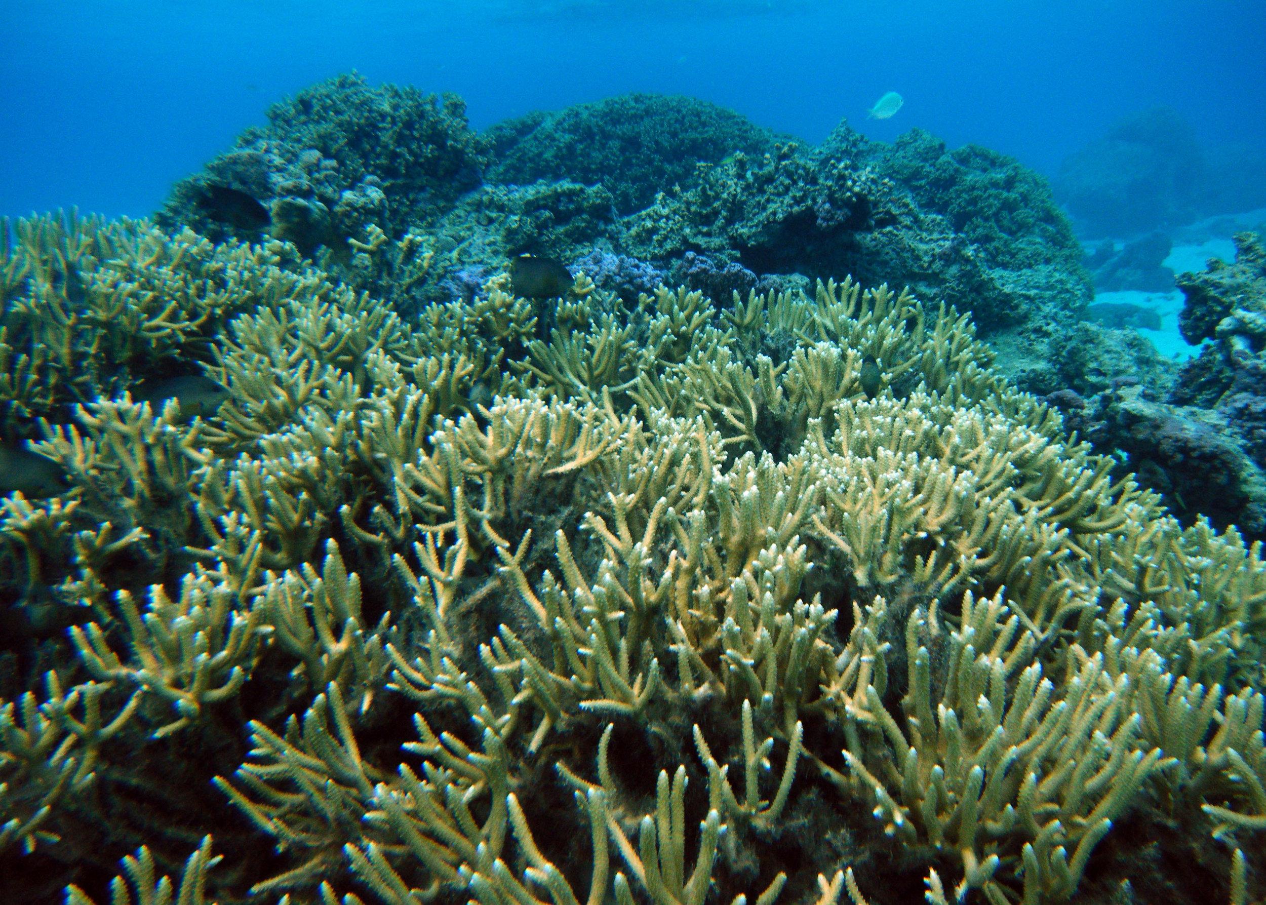 Temae reef.jpg