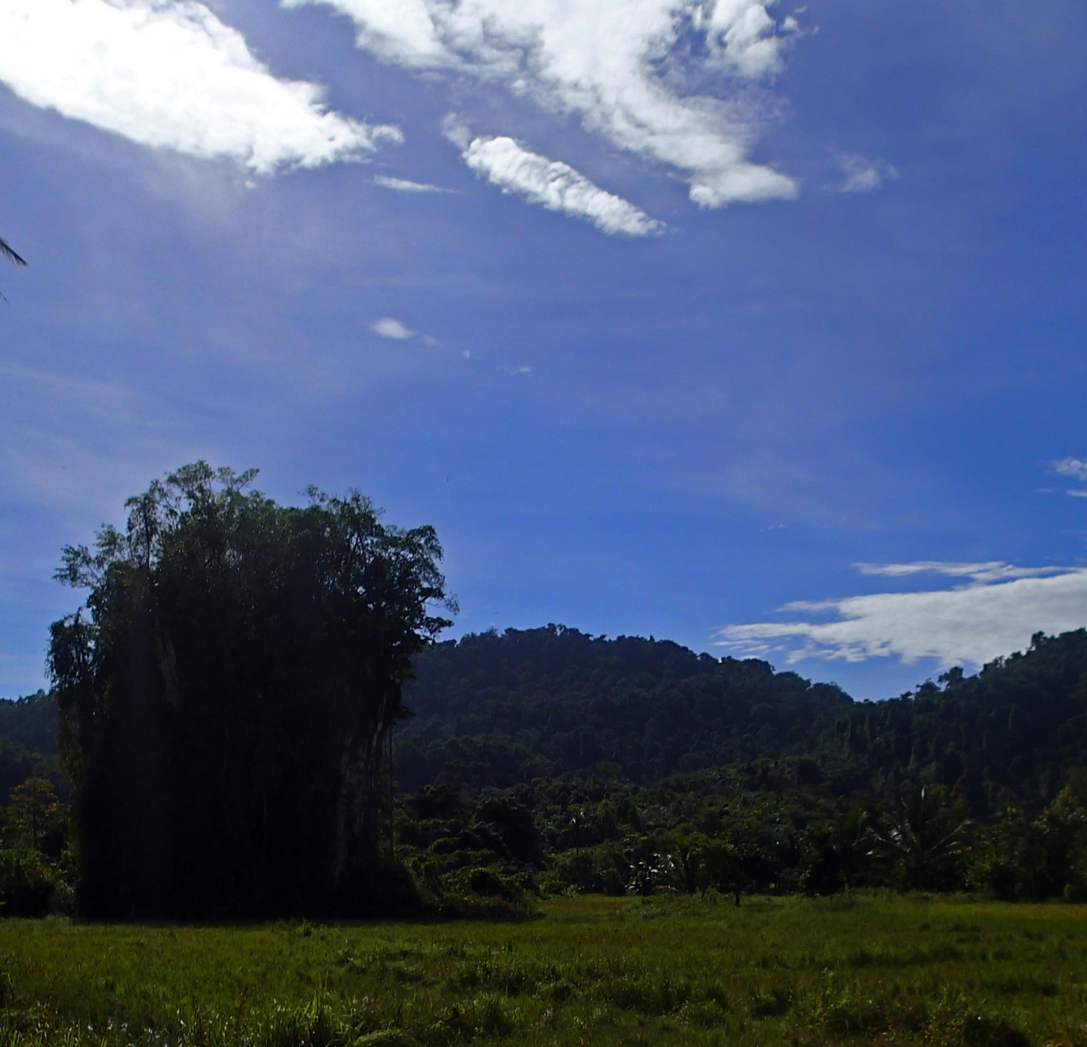 karst pinnacles.jpg