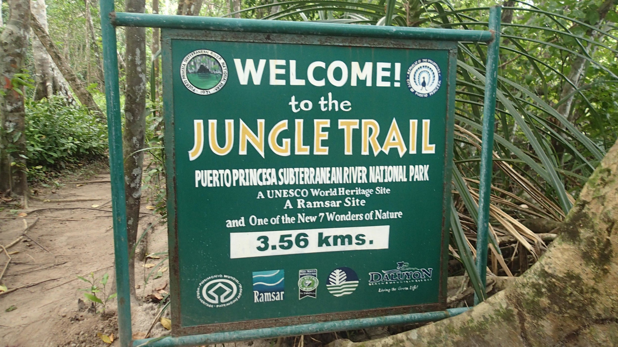 jungle trail.jpg