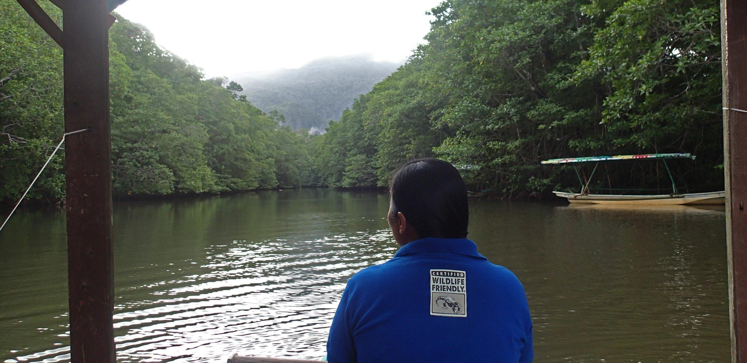 mangrove paddle boat trip.jpg