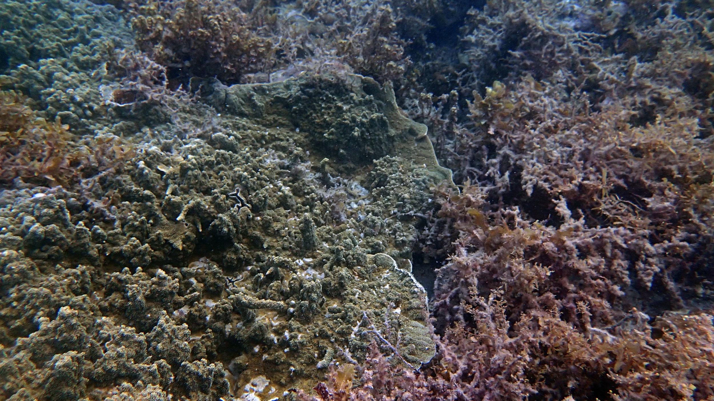 coral vs. algae.jpg