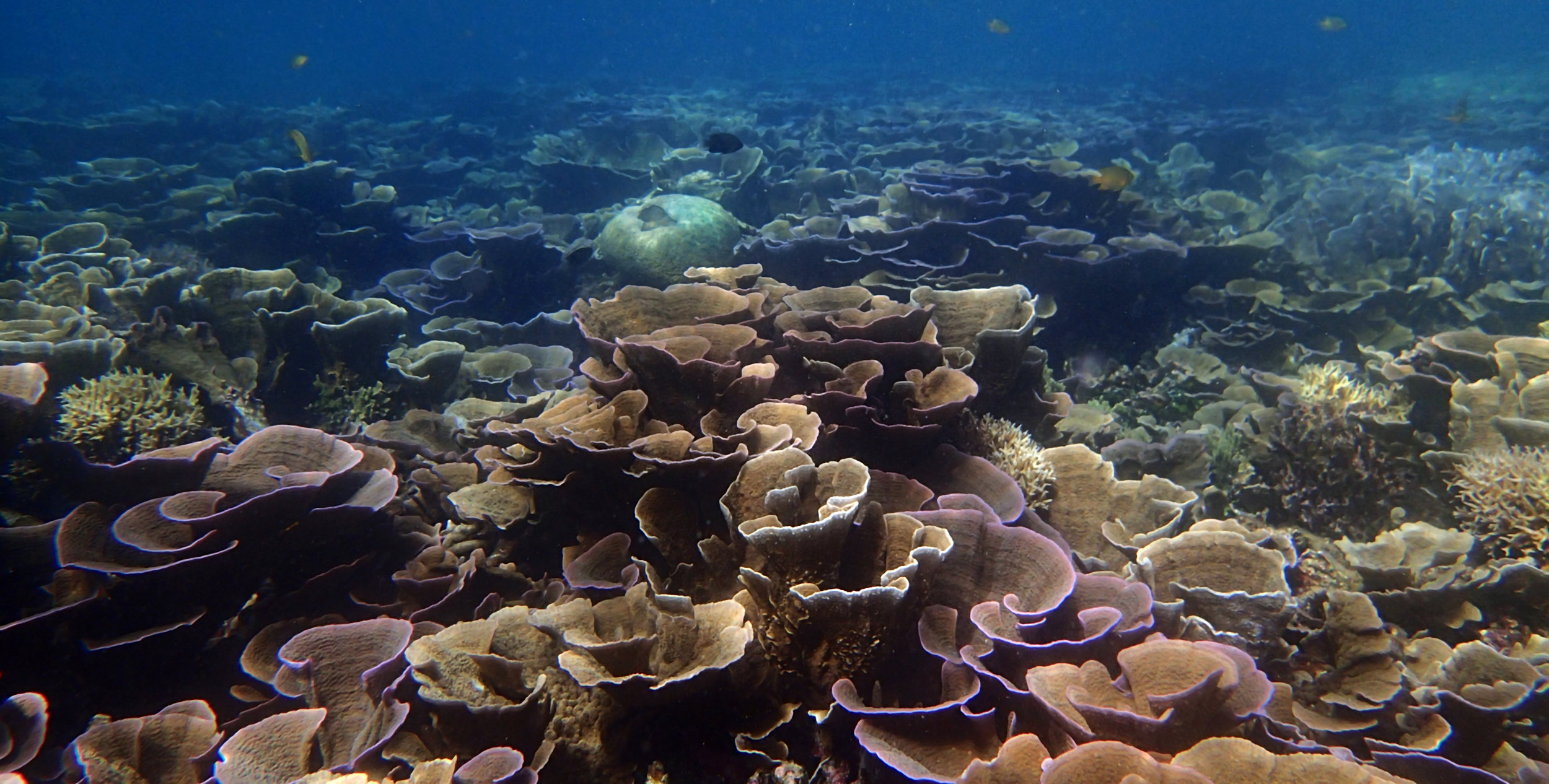 epic Palawan coral.jpg