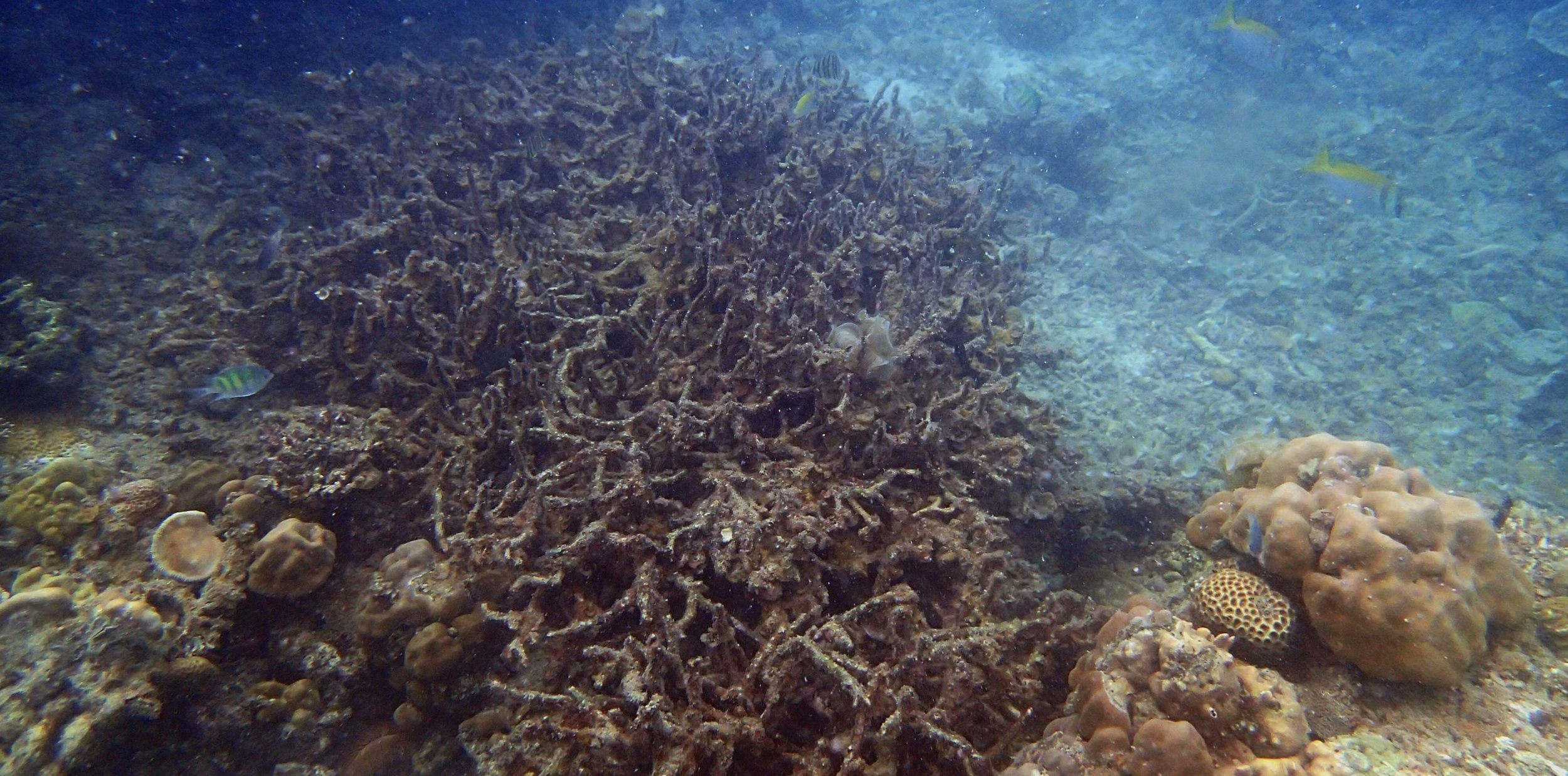pollution damaged reef.jpg