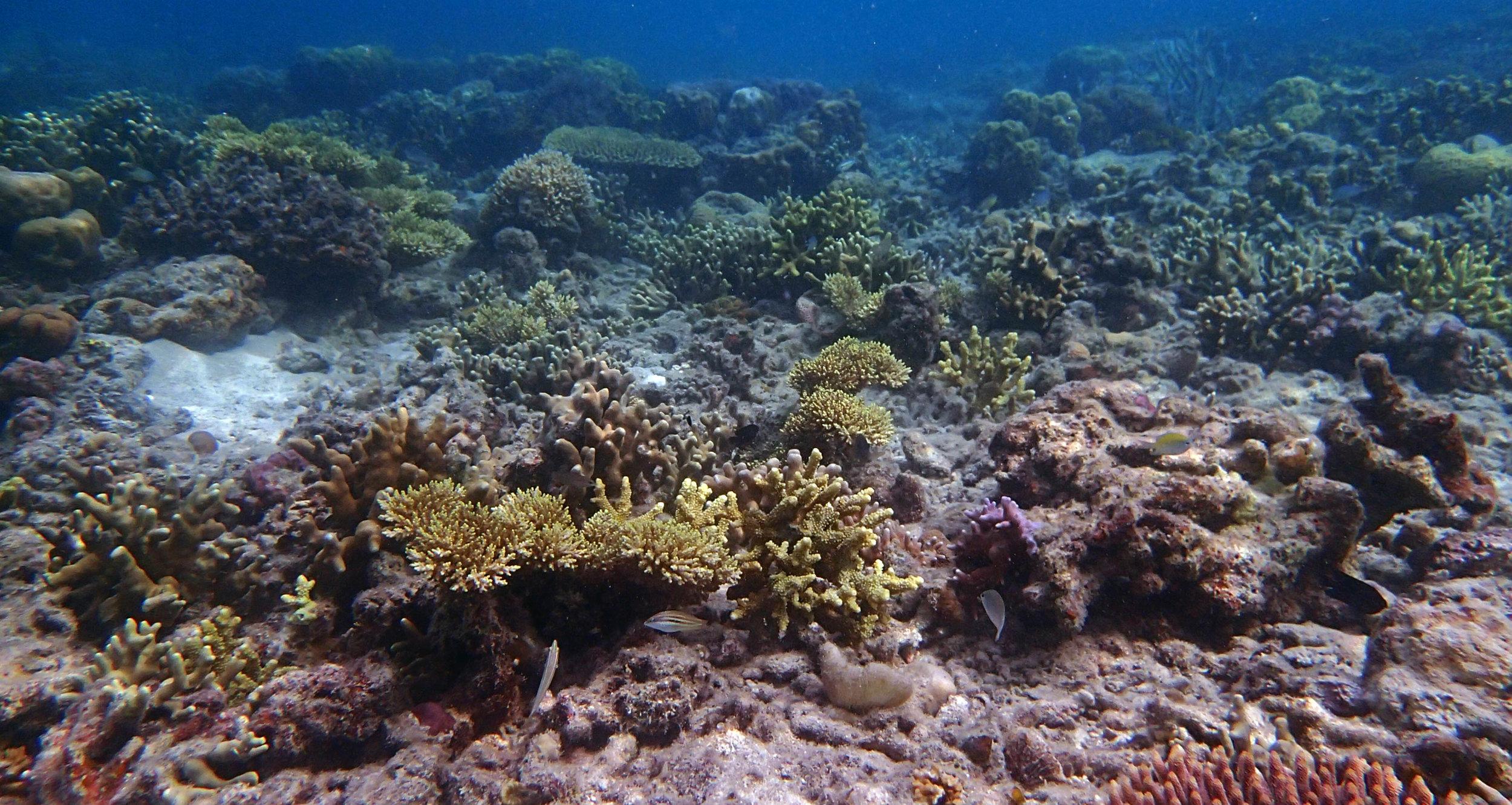 shallow reef near tribal beach.jpg