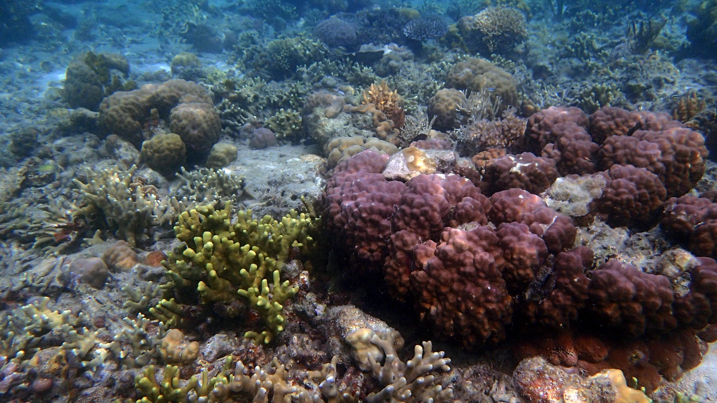 Filipino reef.jpg