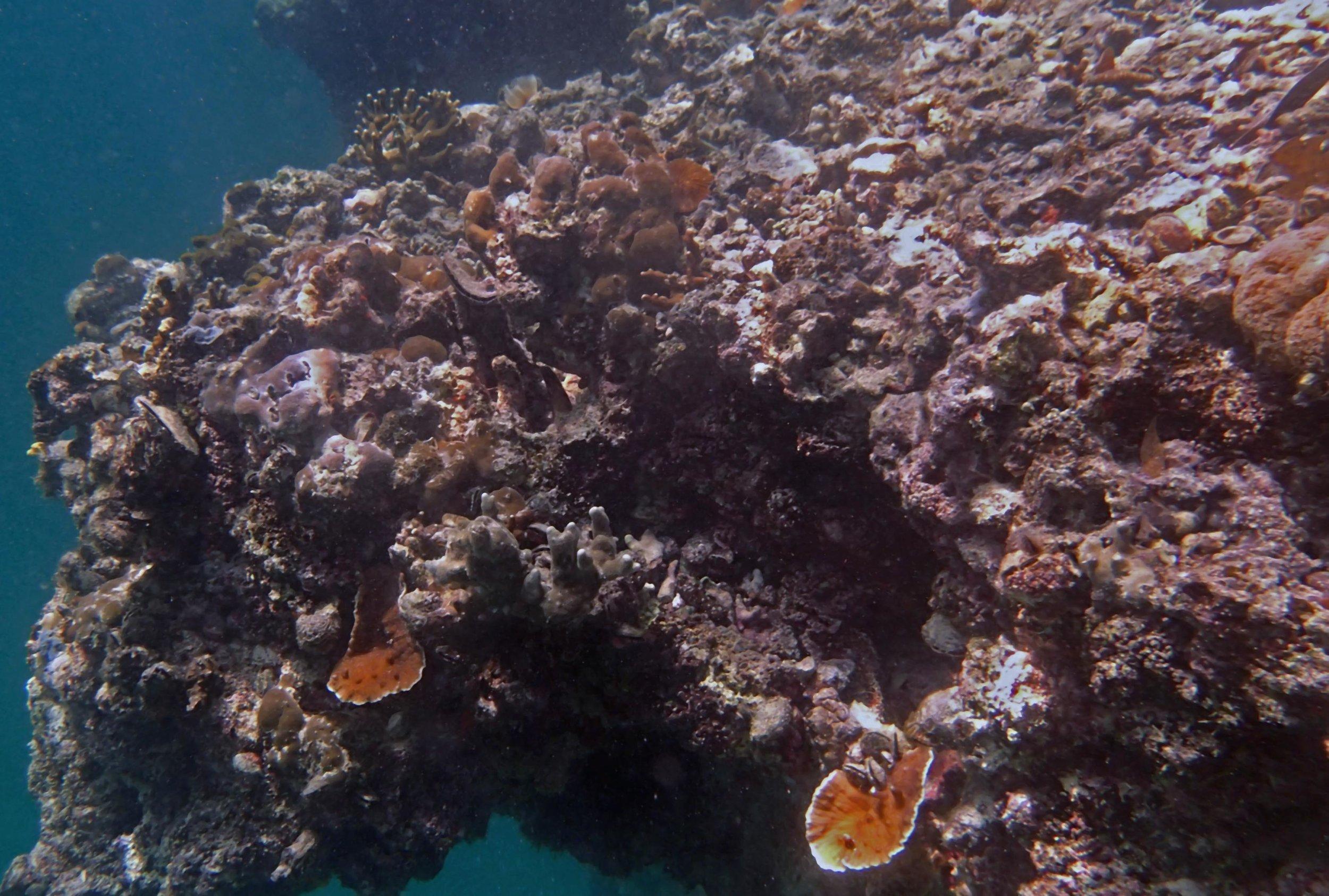reef at Twin Lagoon.jpg