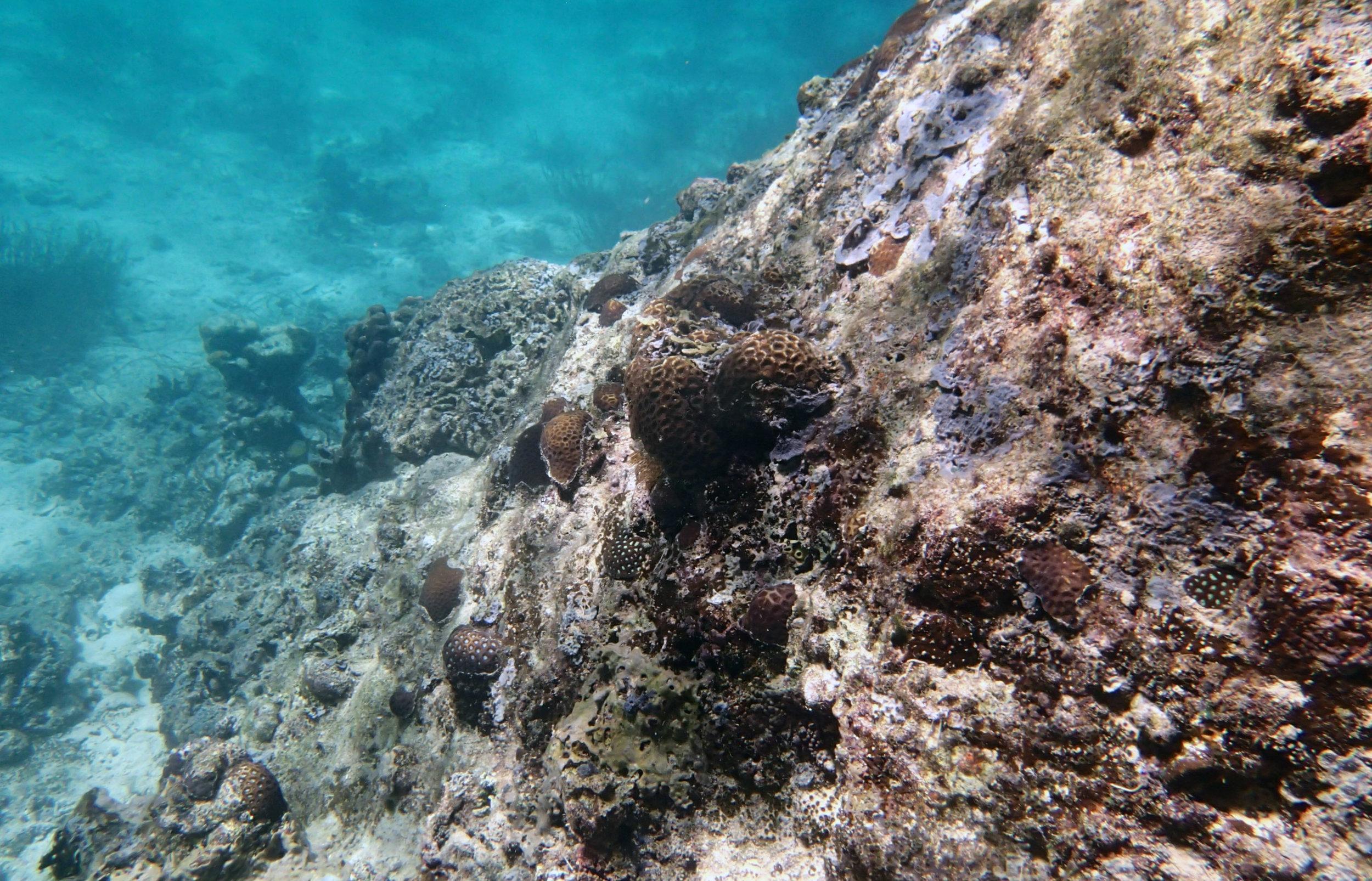 nice corals of Twin Lagoon.jpg