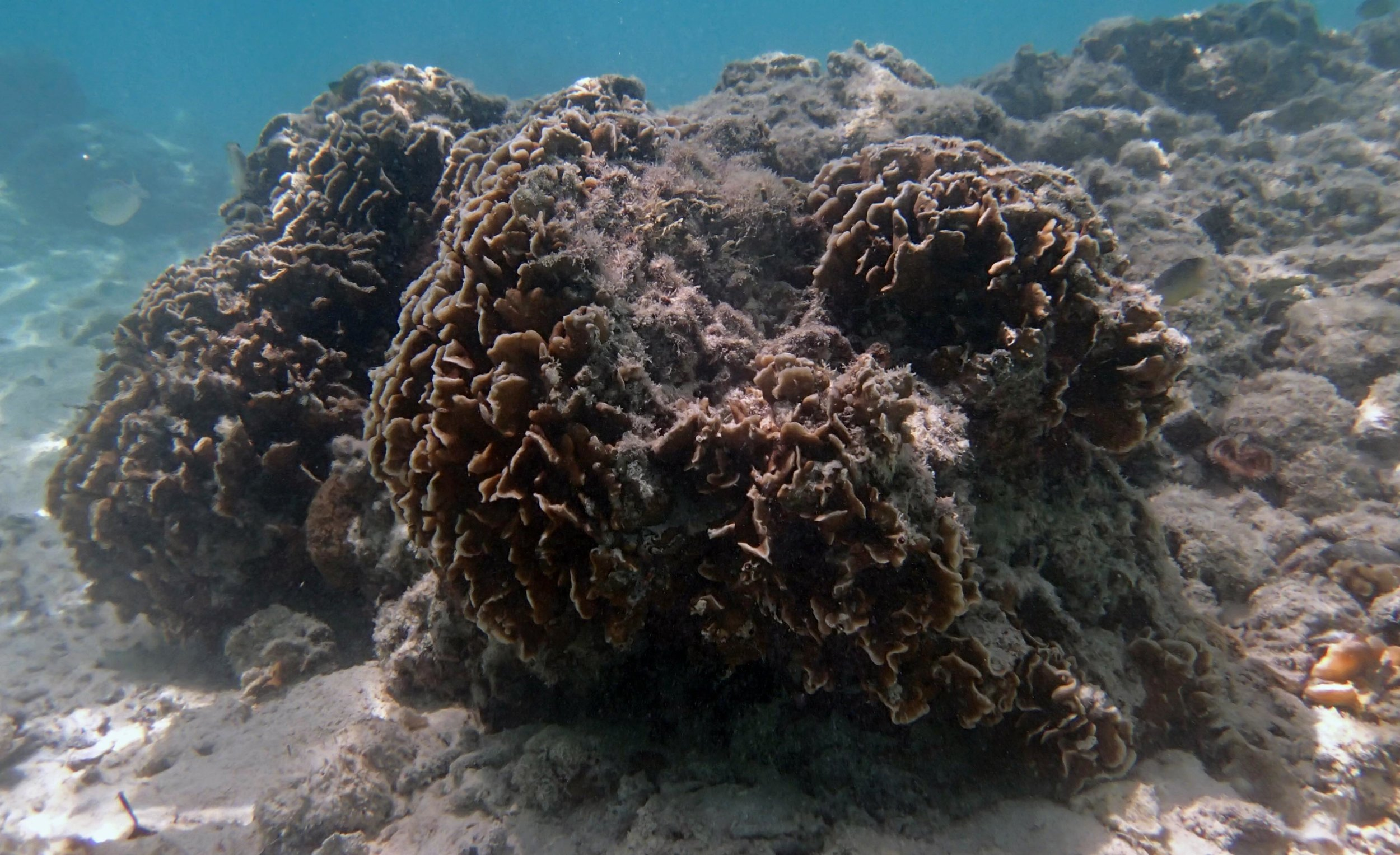 corals of Twin Lagoon.jpg