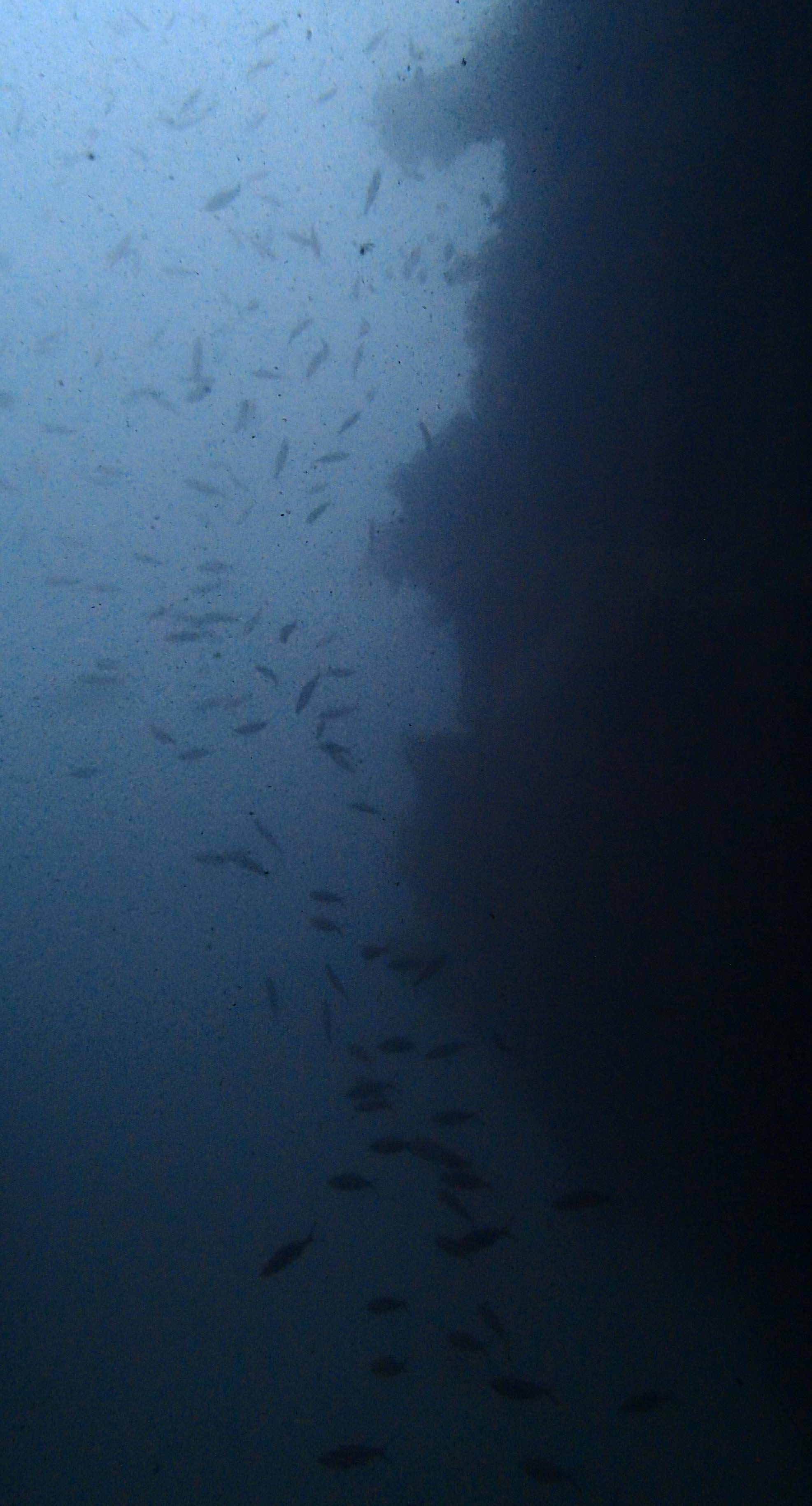 inky depths.jpg