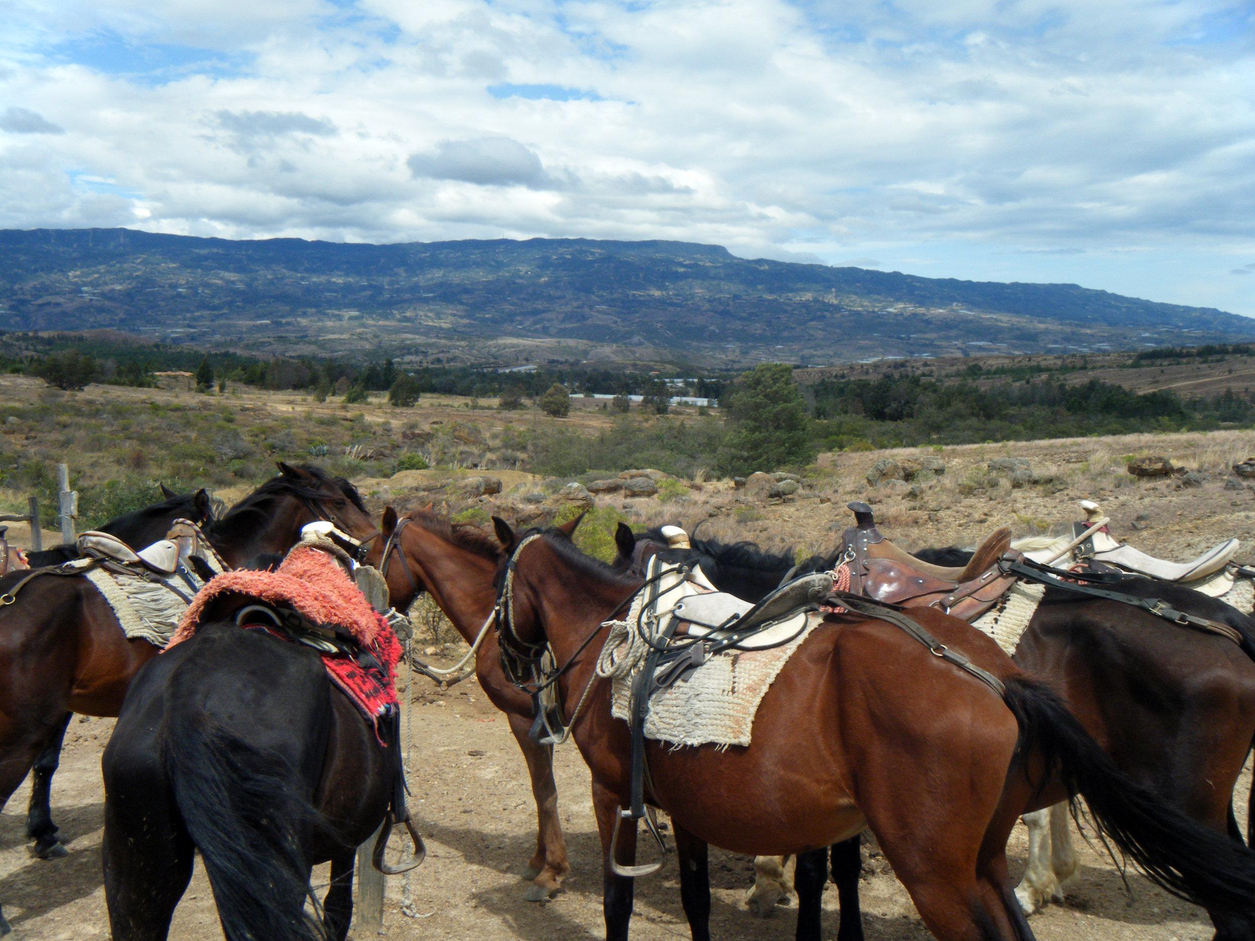 horseback riding in the desert.jpg