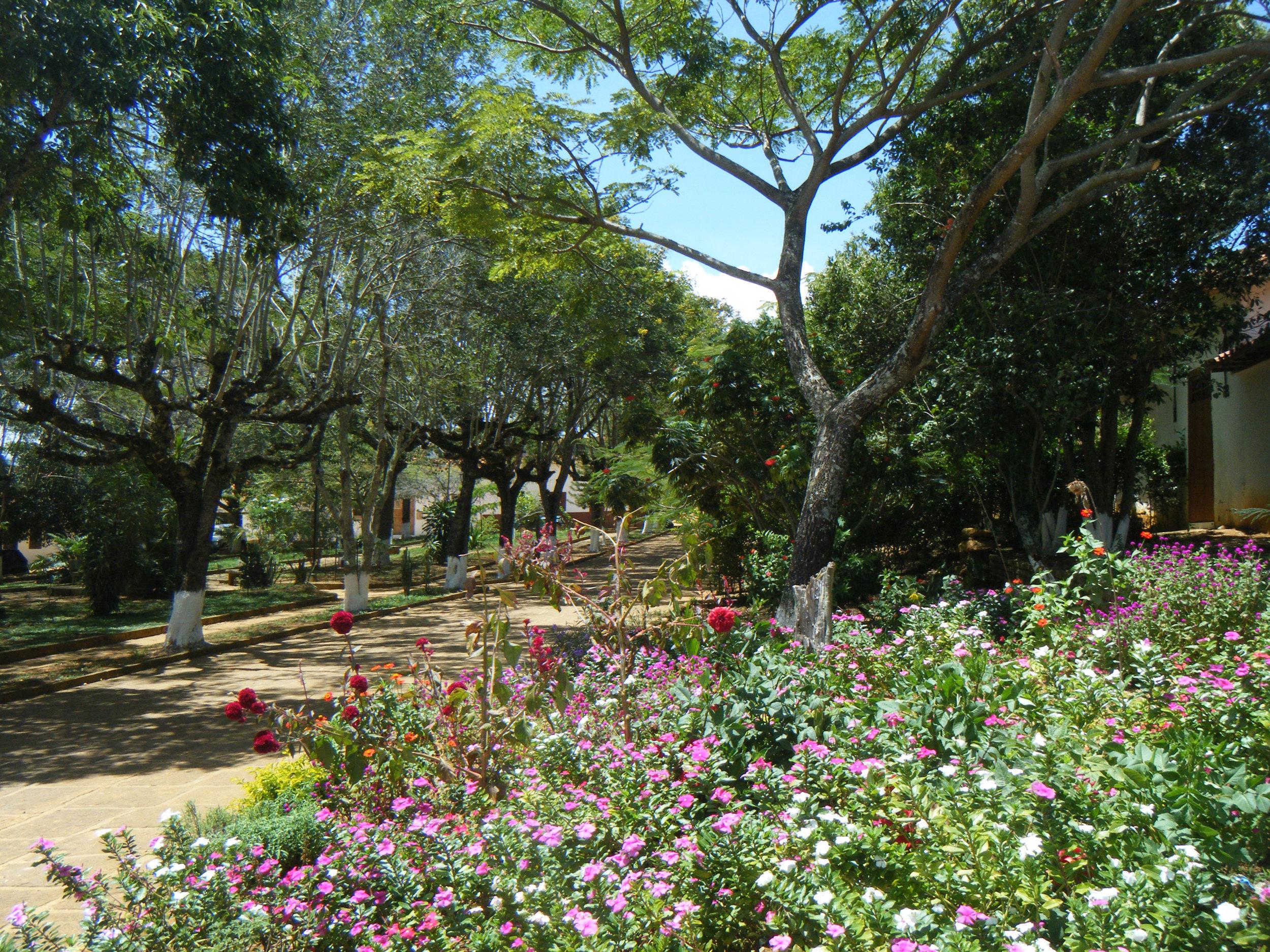 beautiful park.jpg