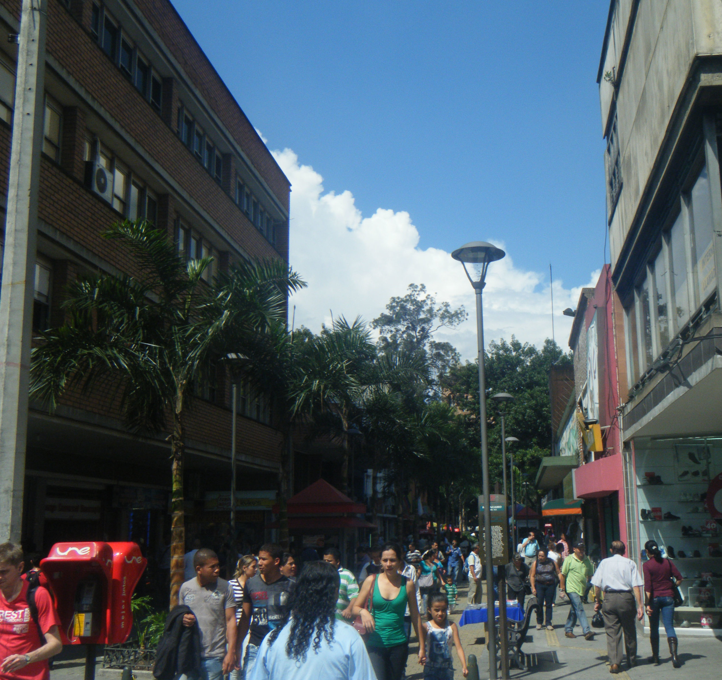 Medellin mullet.jpg