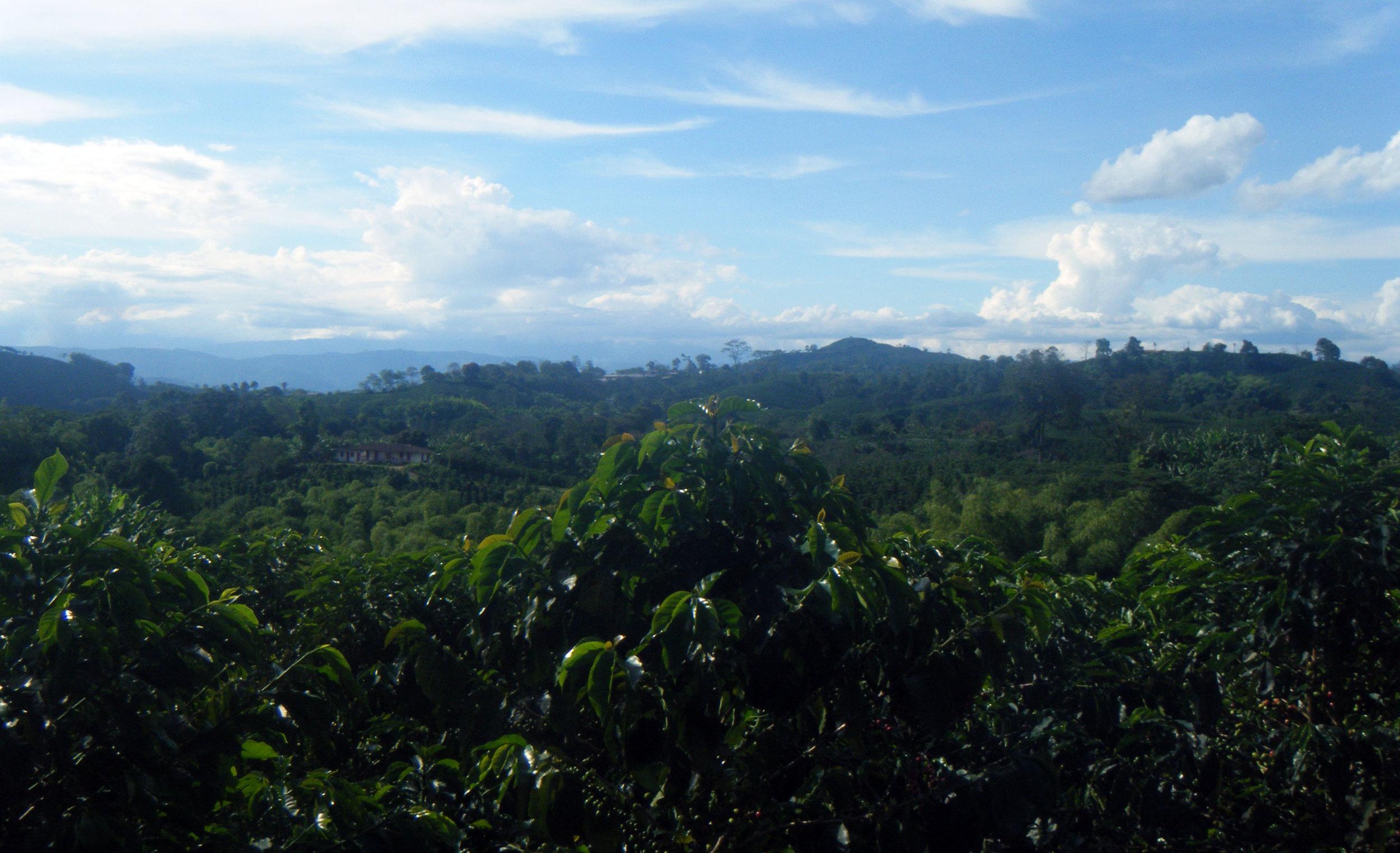 coffee country 10-21-12.jpg