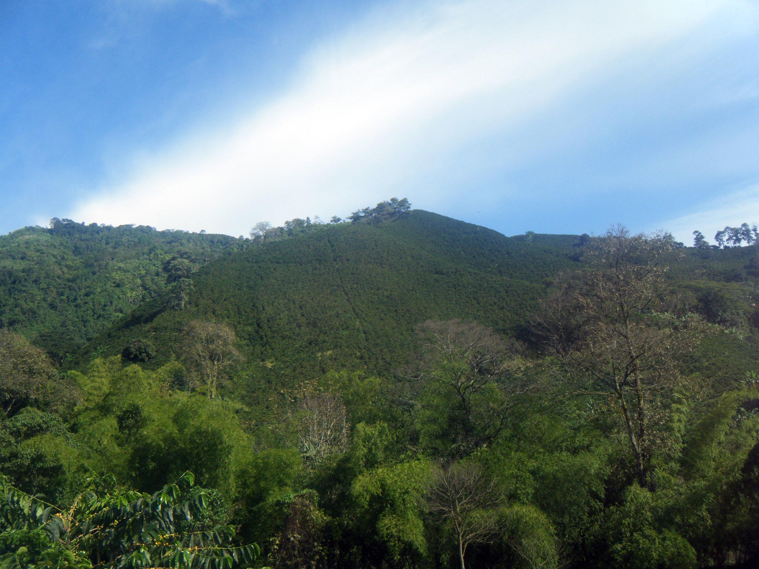 coffee farm 10-21-12.jpg