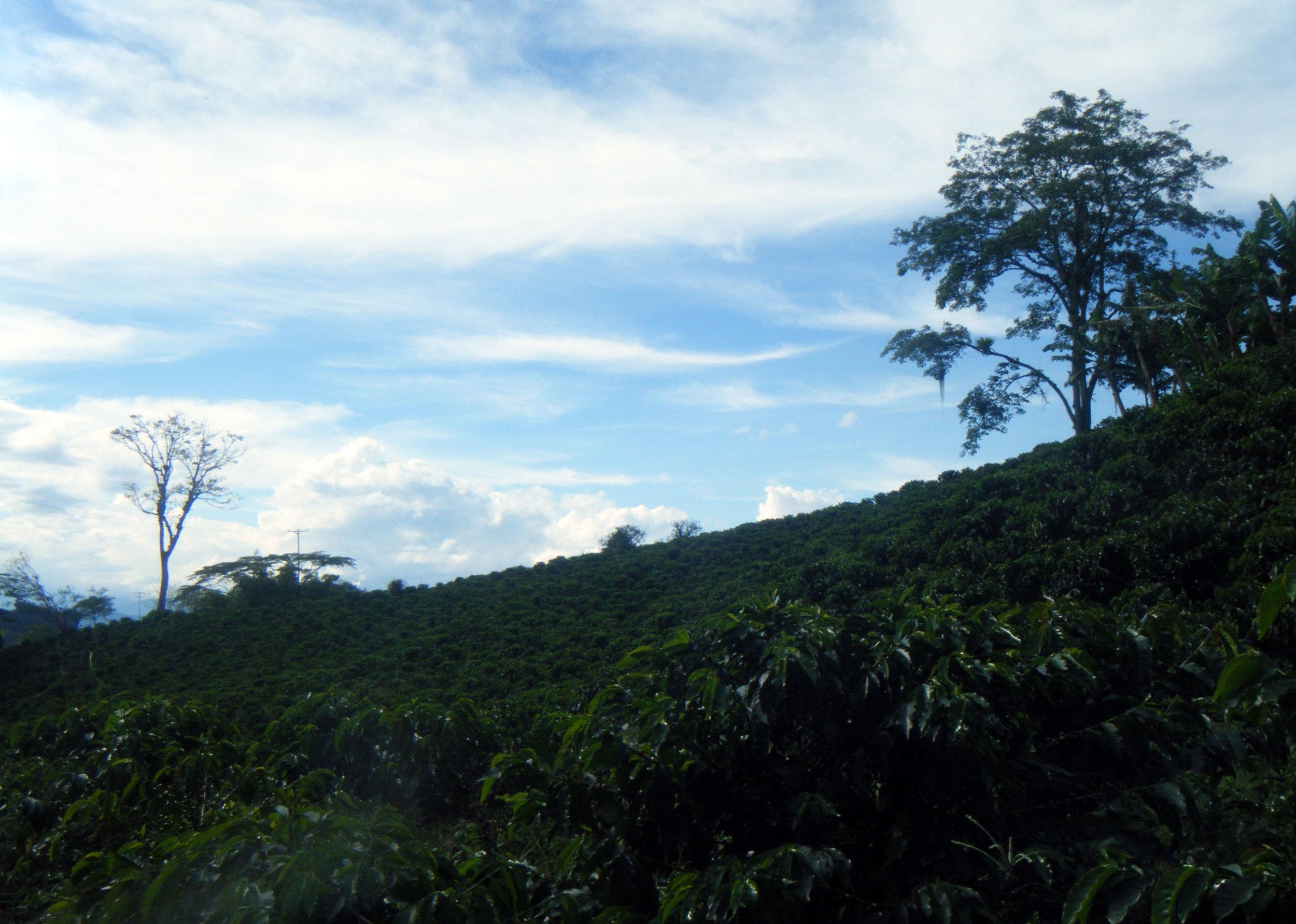 Guayabal Colombia.jpg