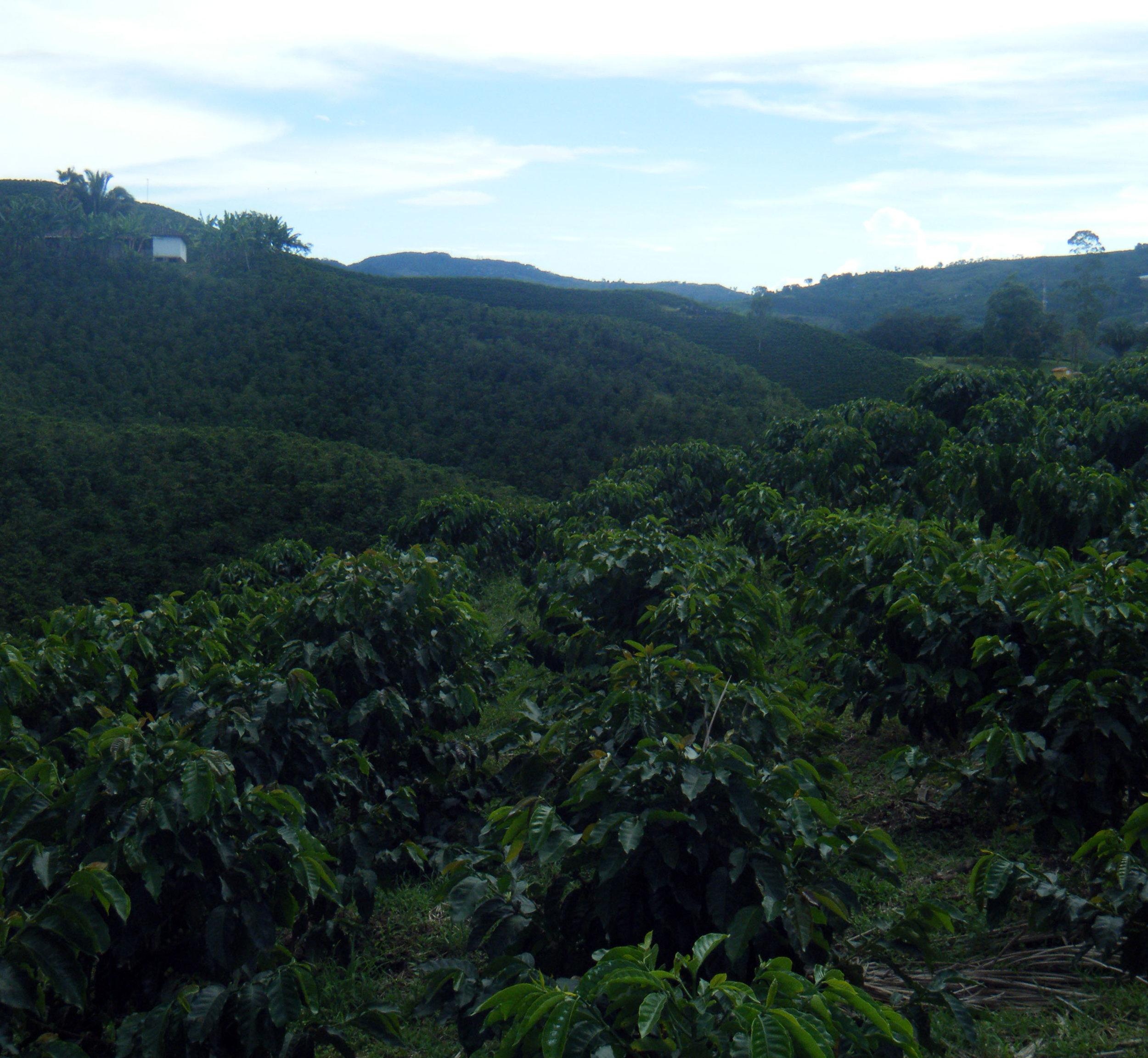 coffee farm.jpg