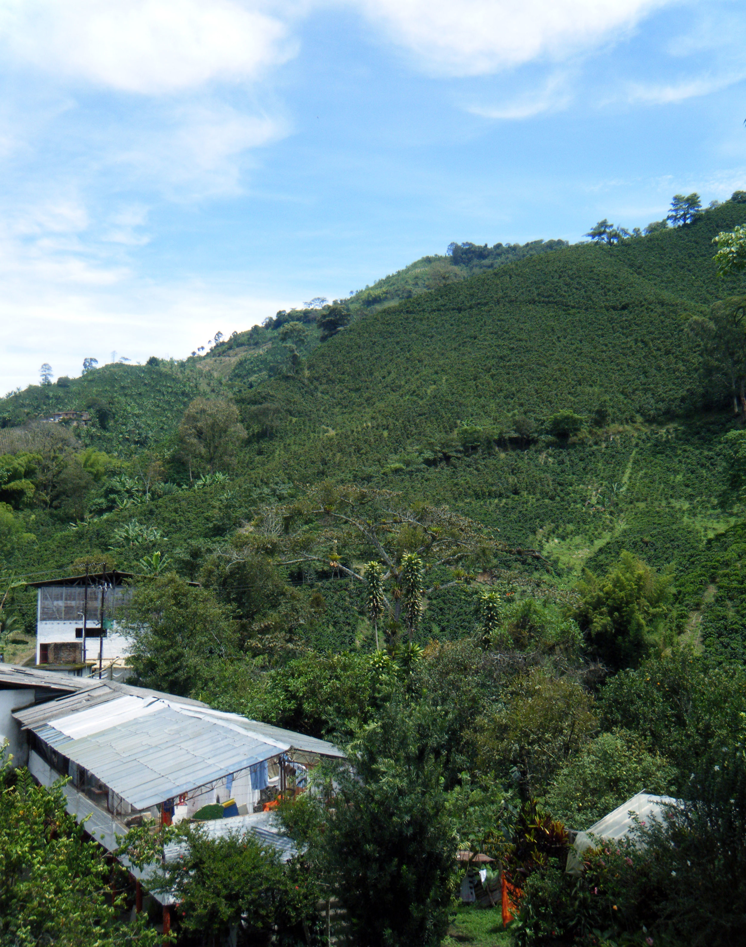 mountainside farm.jpg