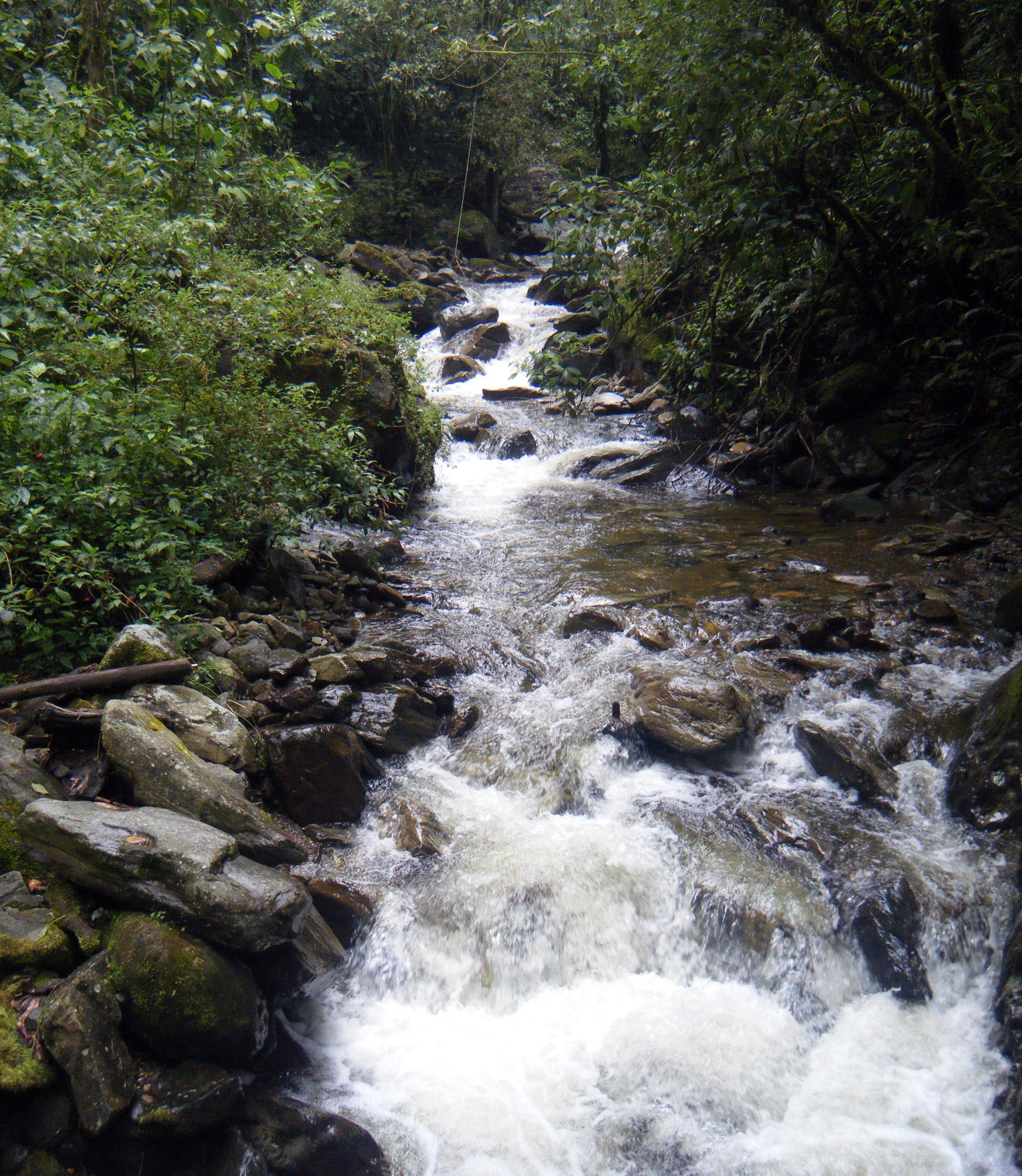 crossing the creek.jpg