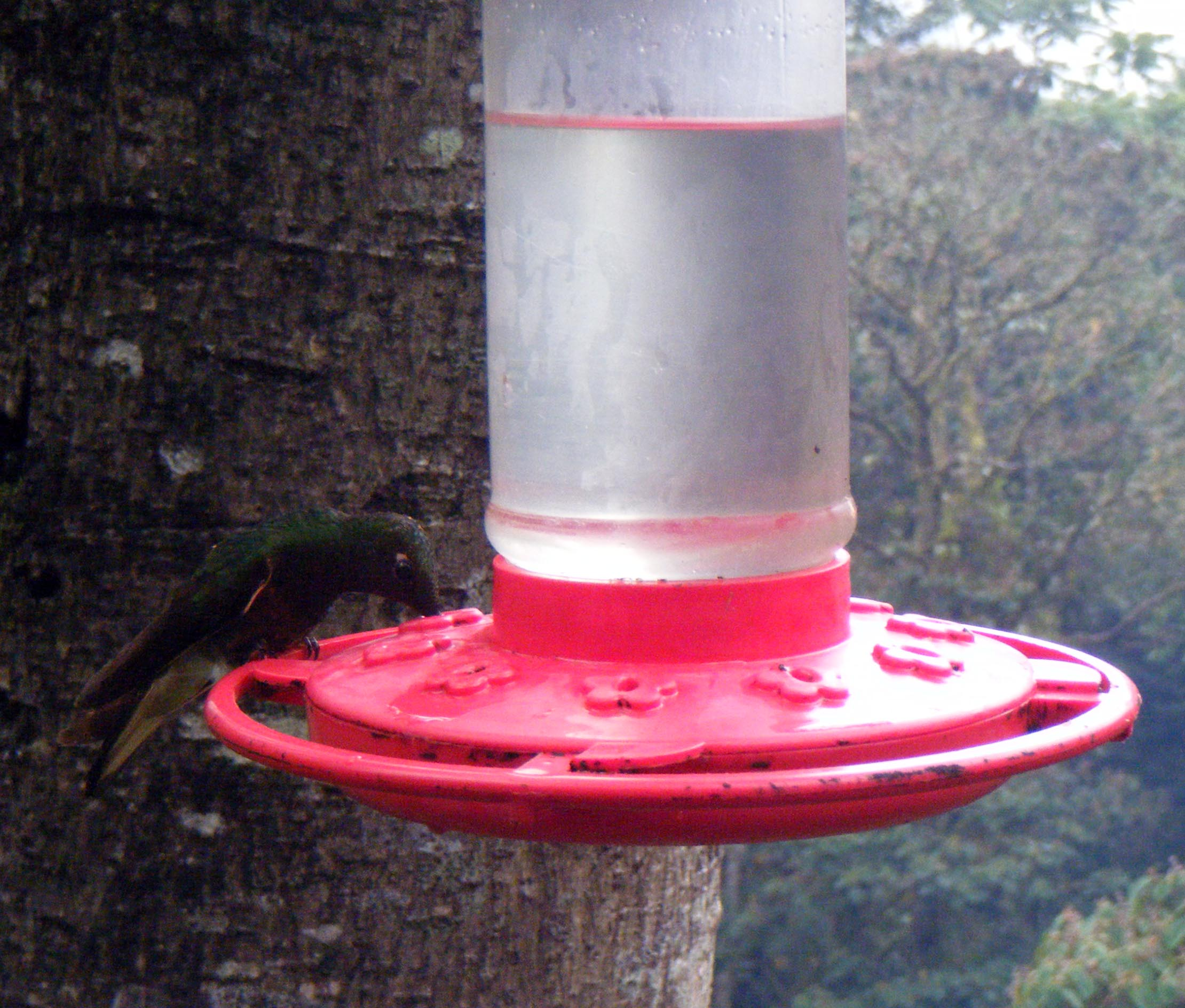 hummingbird farm.jpg