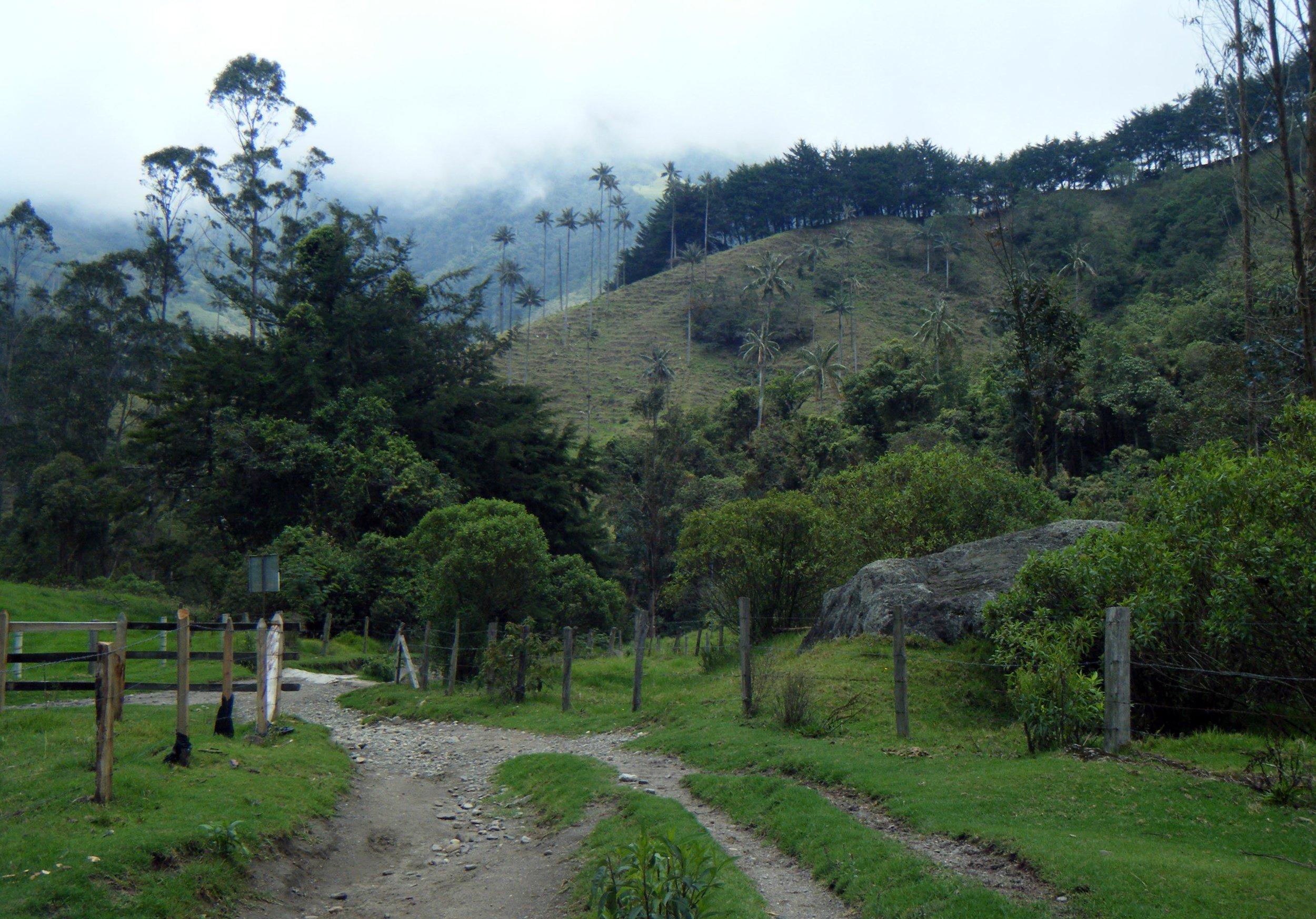 the main trail.jpg