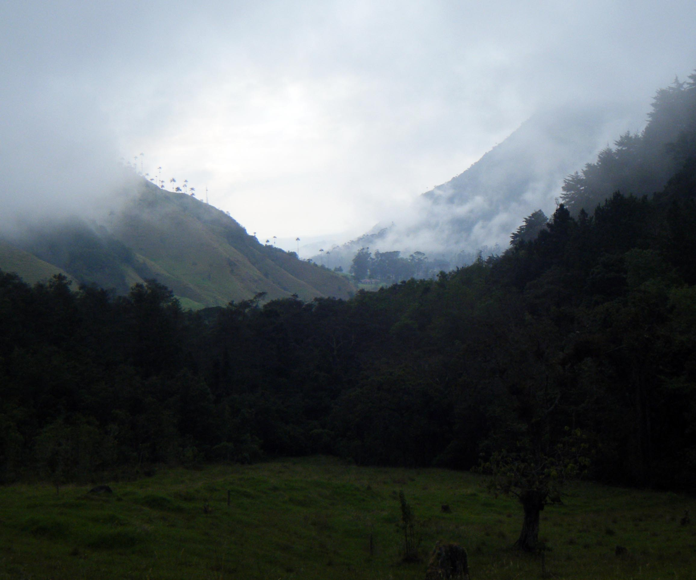 Valle de Cocura.jpg