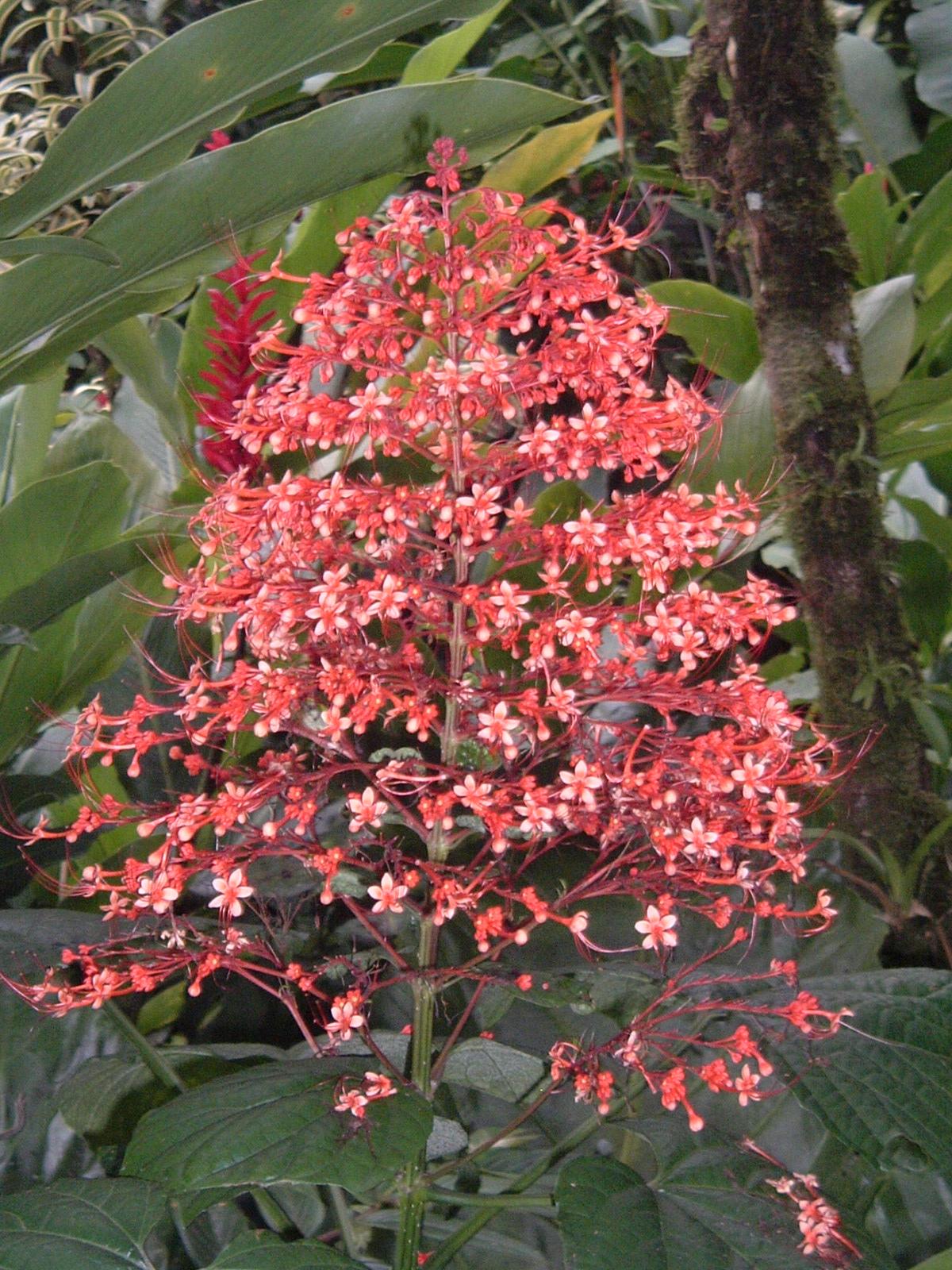 costaricapics 132.jpg
