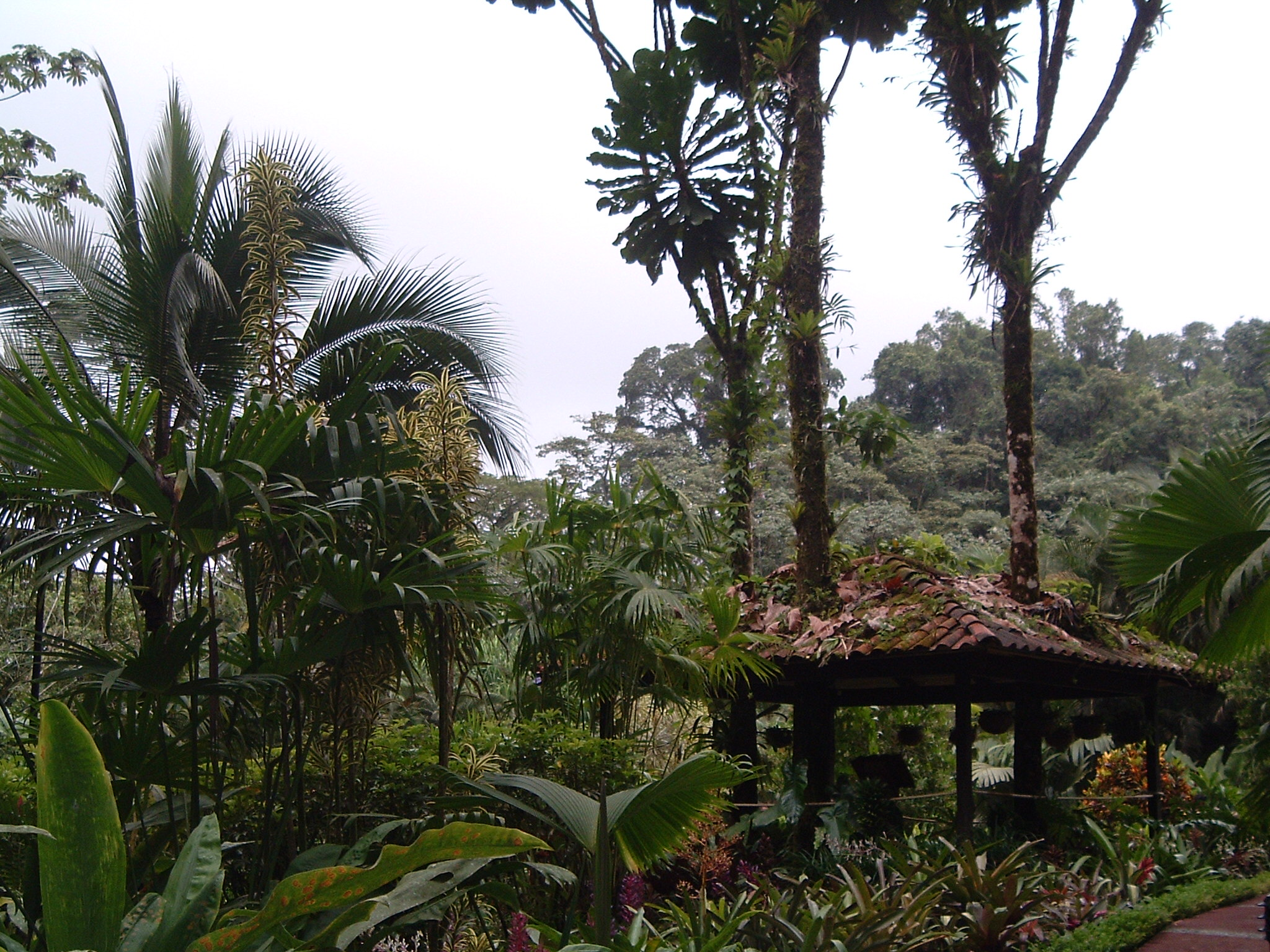 costaricapics 129.jpg