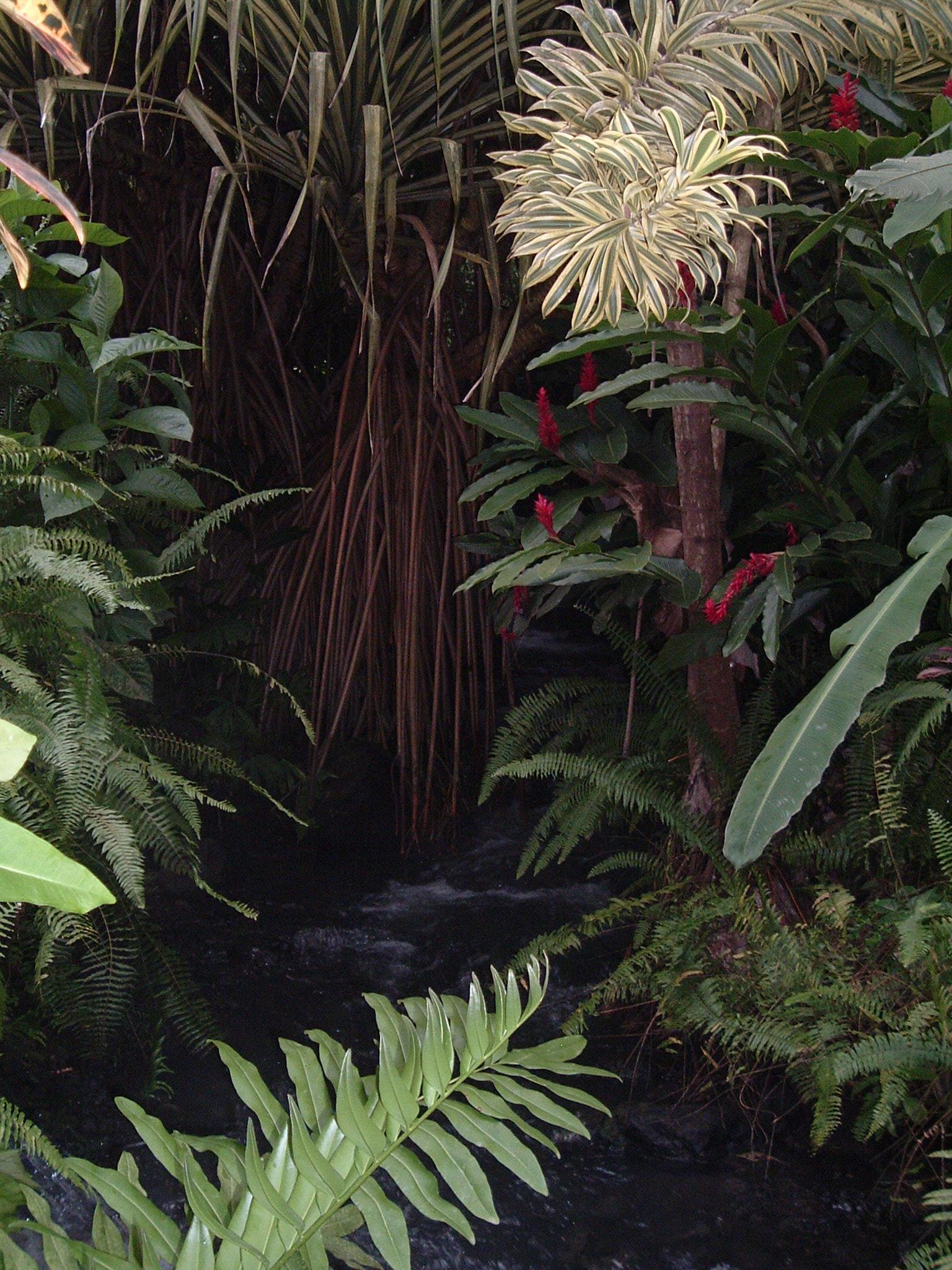 costaricapics 128.jpg