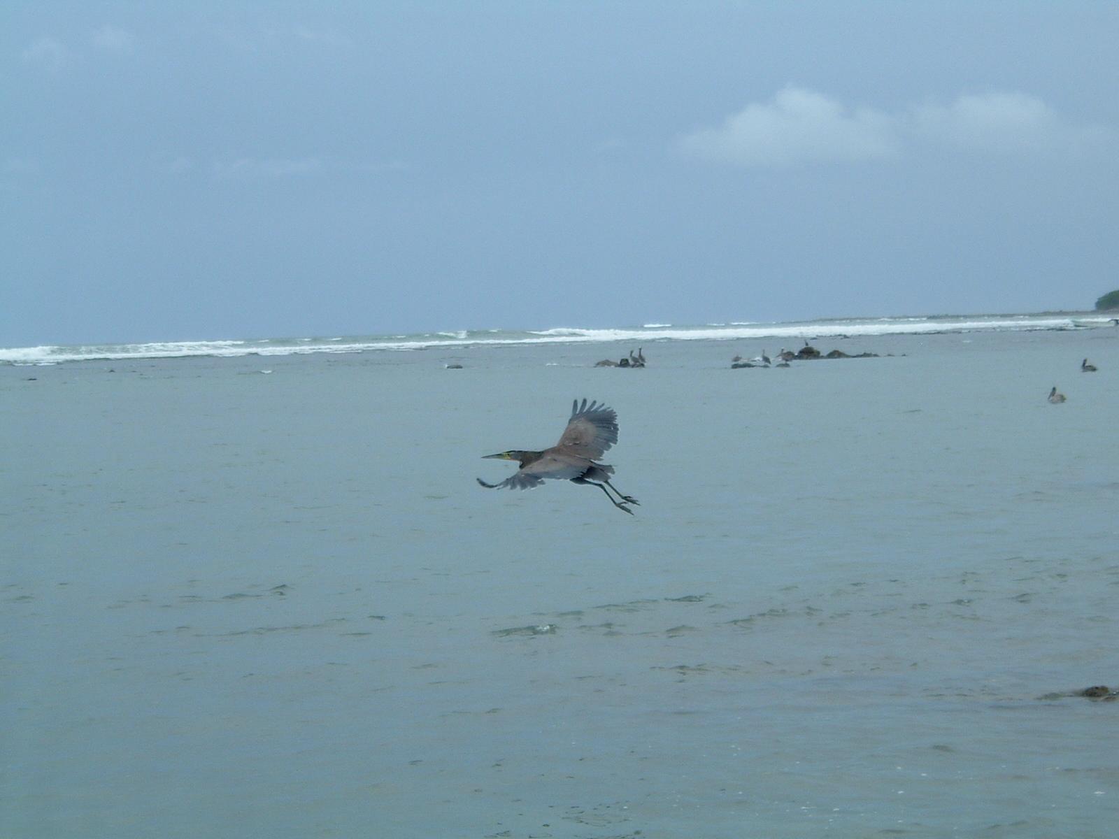 costaricapics 052.jpg