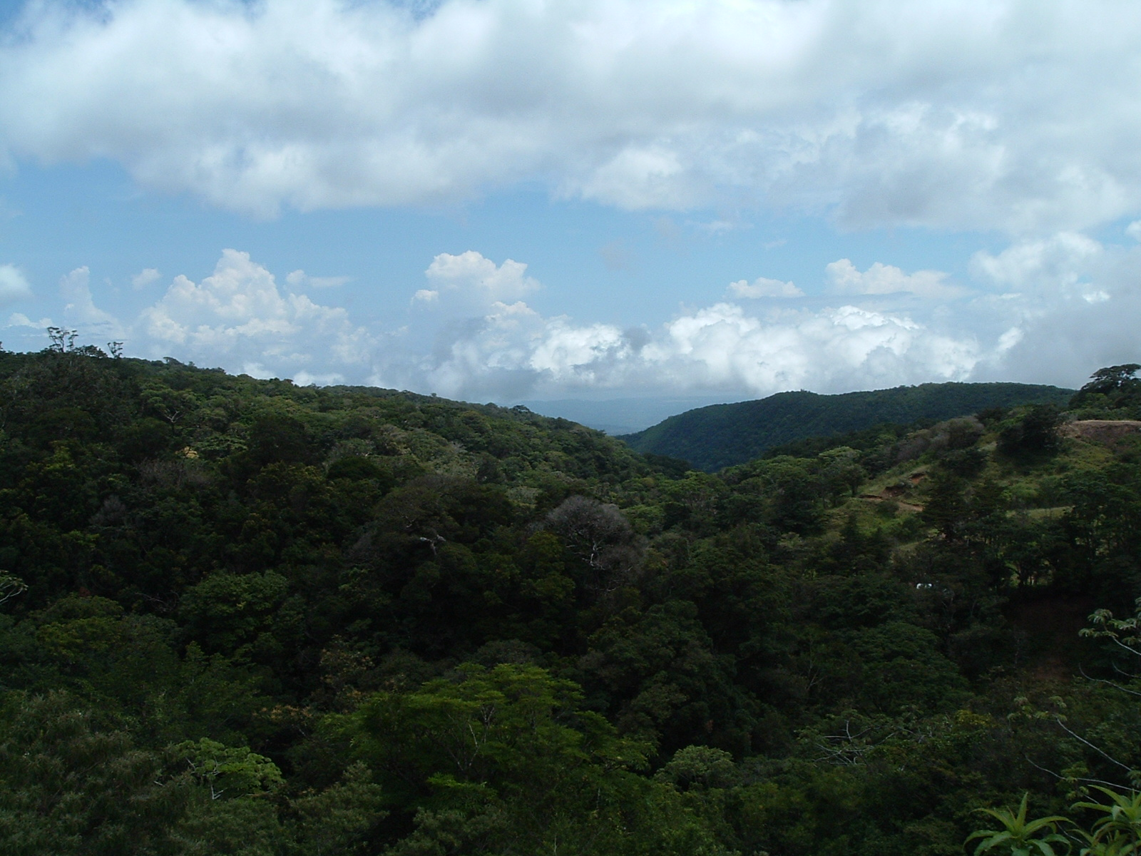 costaricapics 022.jpg