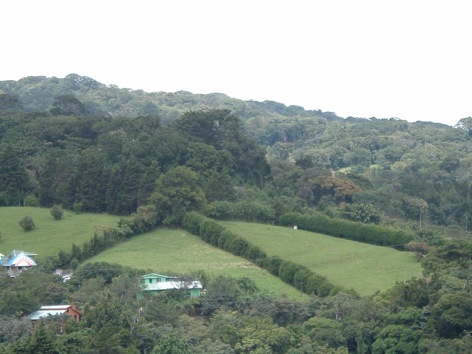 costaricapics 018.jpg